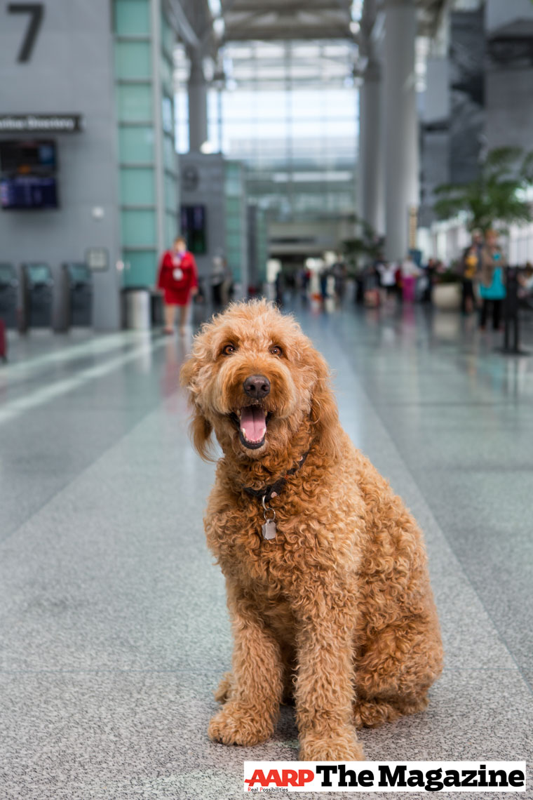 Editorial Photography | Airport Dog for AARP magazine by Mark Rogers