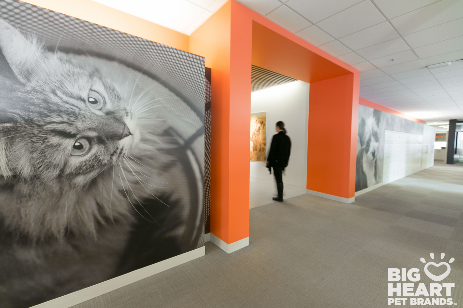 Commissioned Photography | Big Heart Office Cat by Mark Rogers