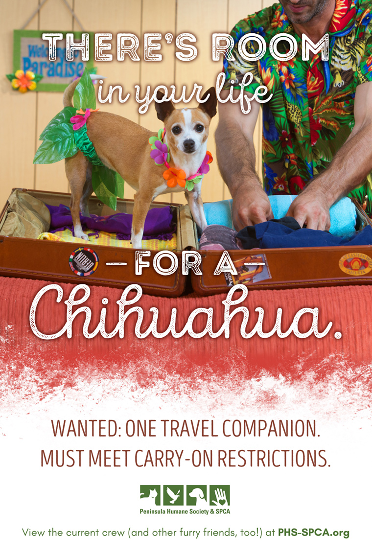 Chihuahua-Campaign-Packing