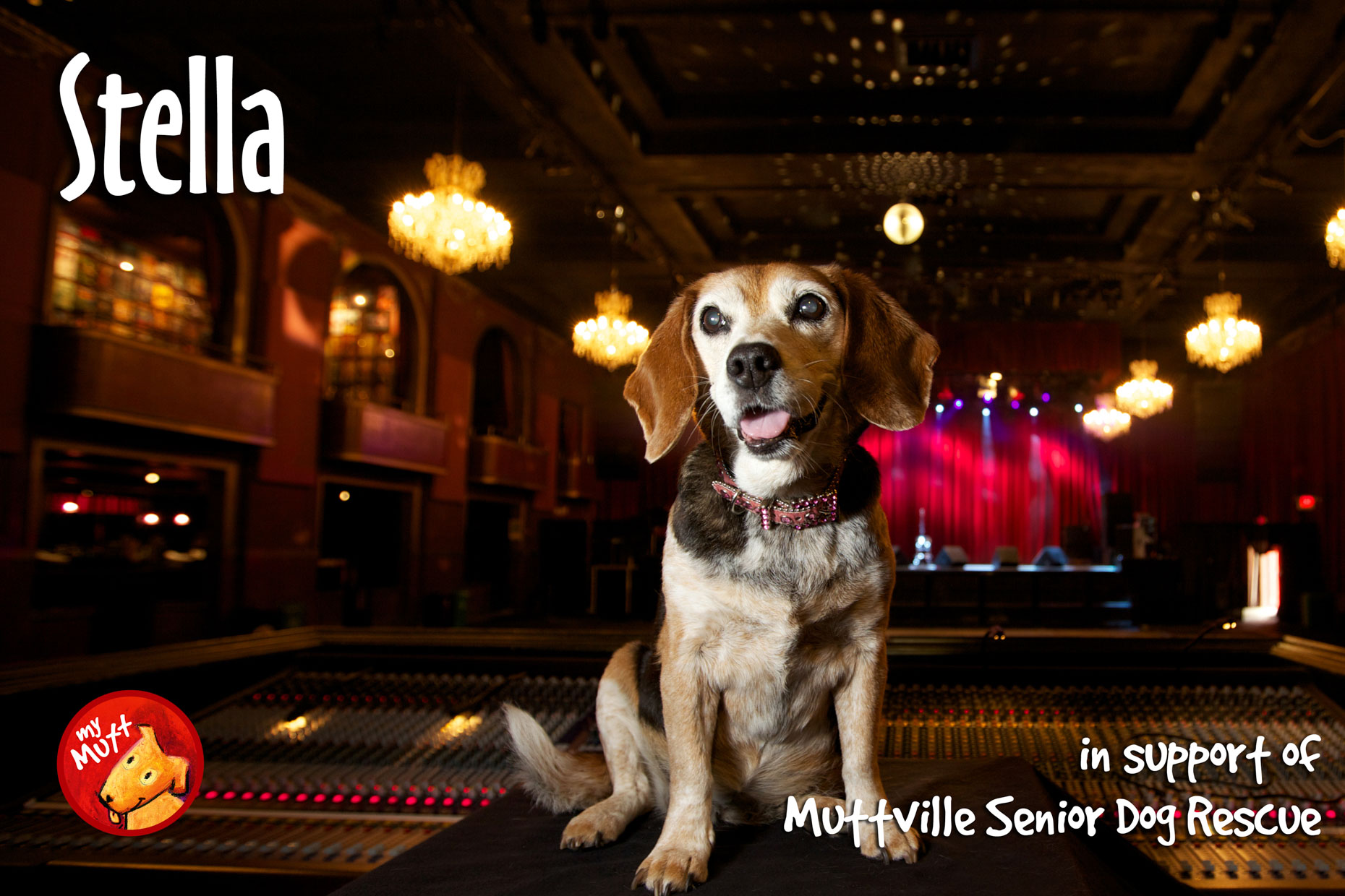 Commercial Photography | Dog at Music Venue by Mark Rogers