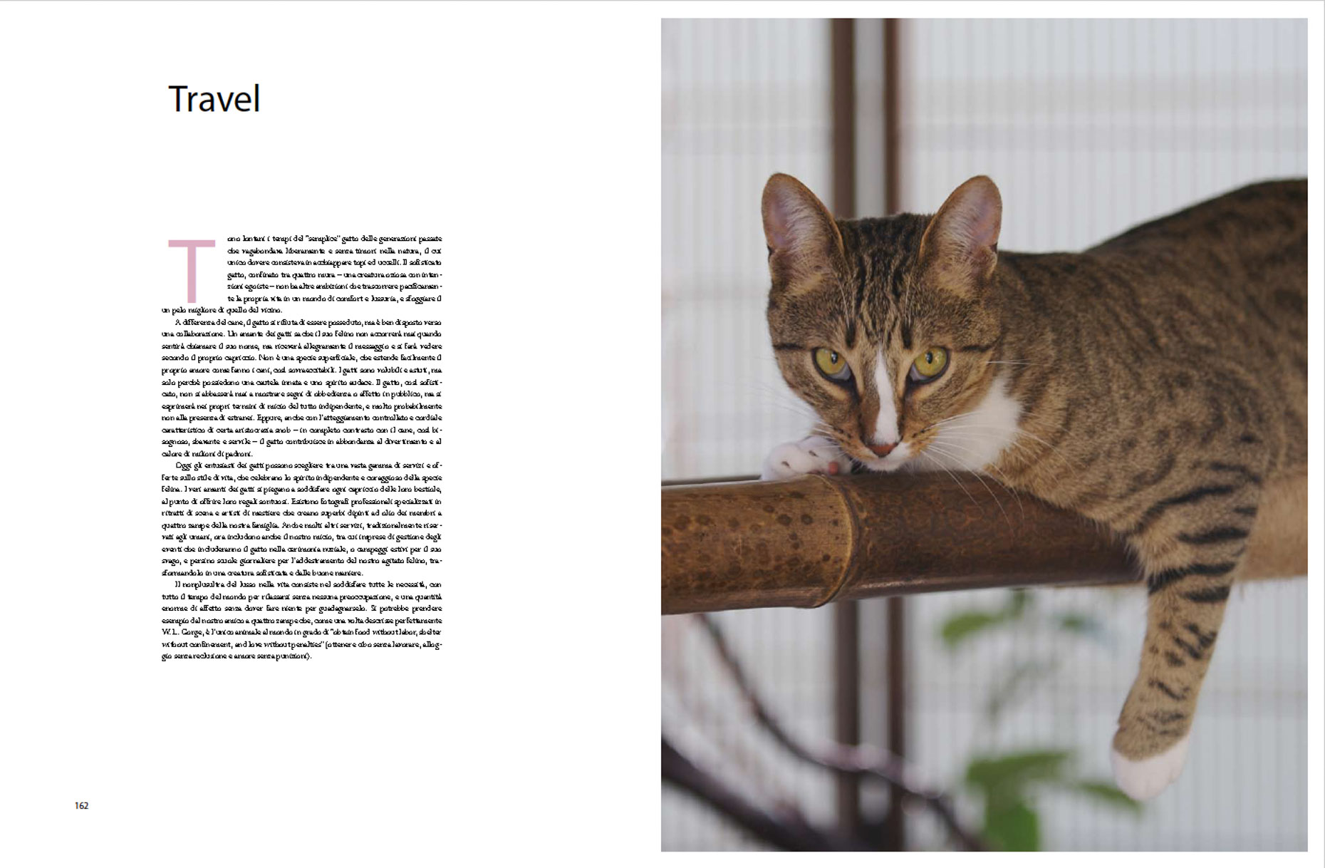Commissioned Photography | Luxury for Cats Book by Mark Rogers