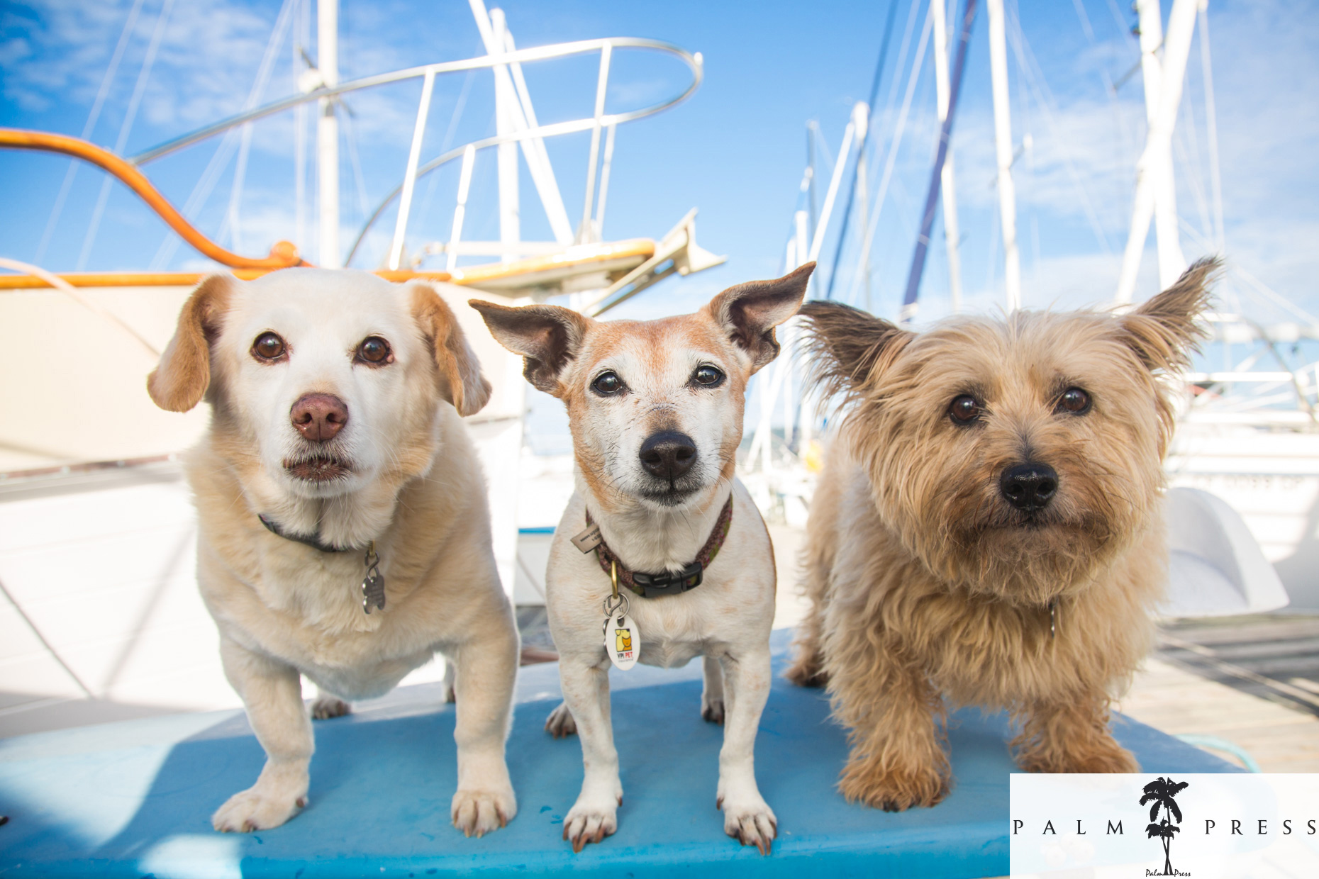 Editorial Pet Photography |Three Dogs on Boat by Mark Rogers