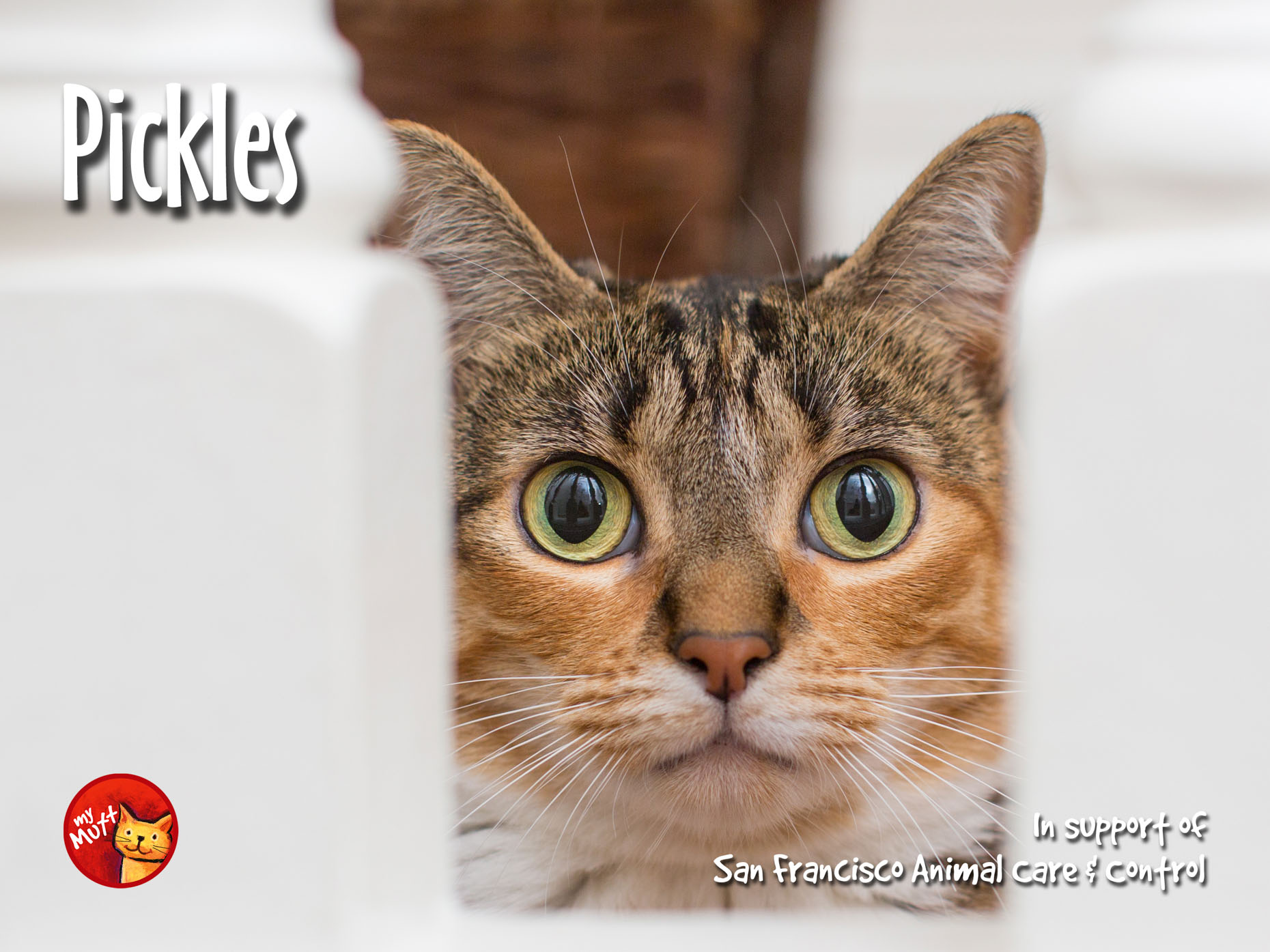 Animal Rescue Poster | Peeking Tabby Cat by Mark Rogers