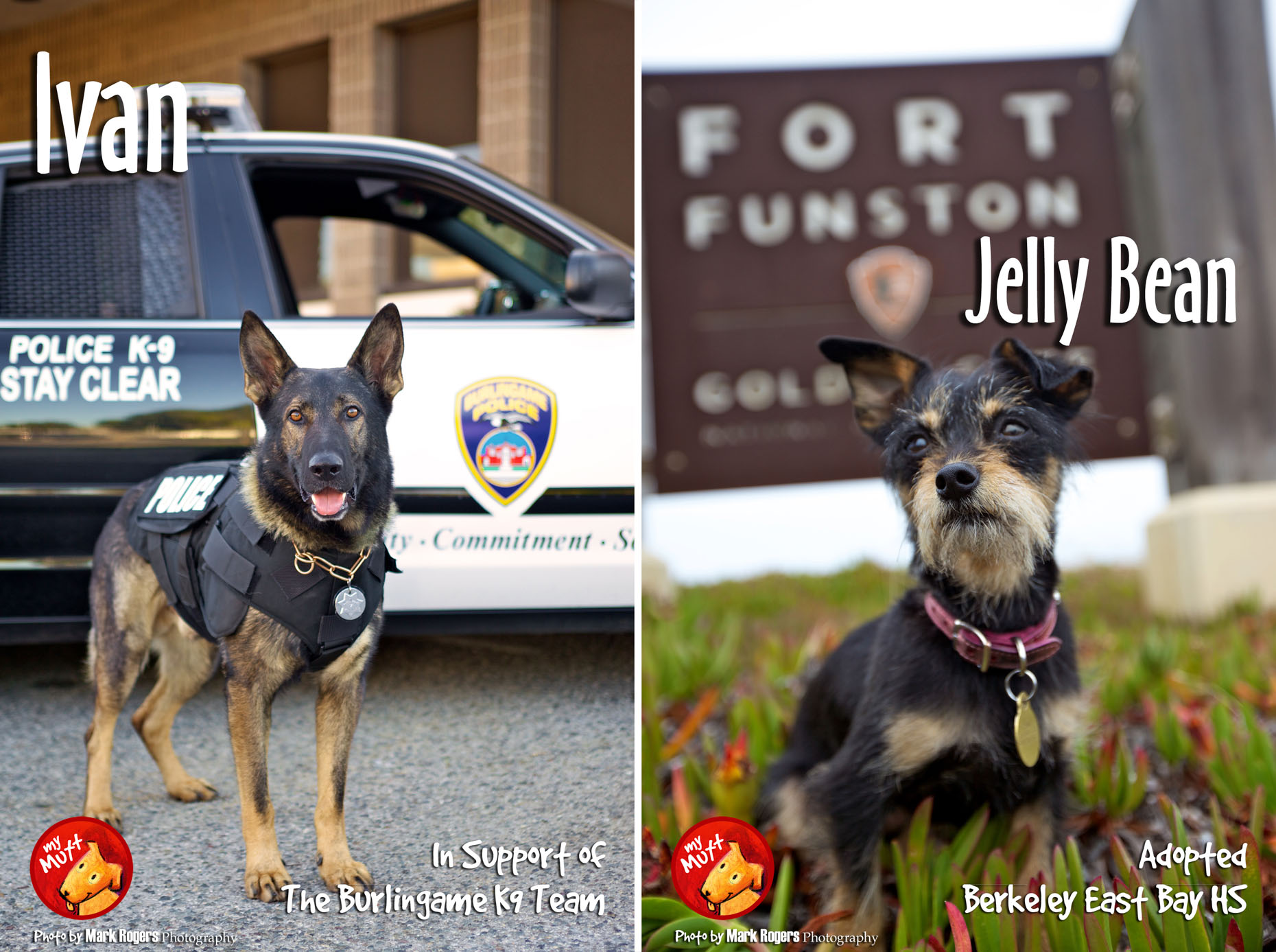 My Mutt Rescue Poster | Dog at Fort Funston and K9 Police Dog by Mark Rogers