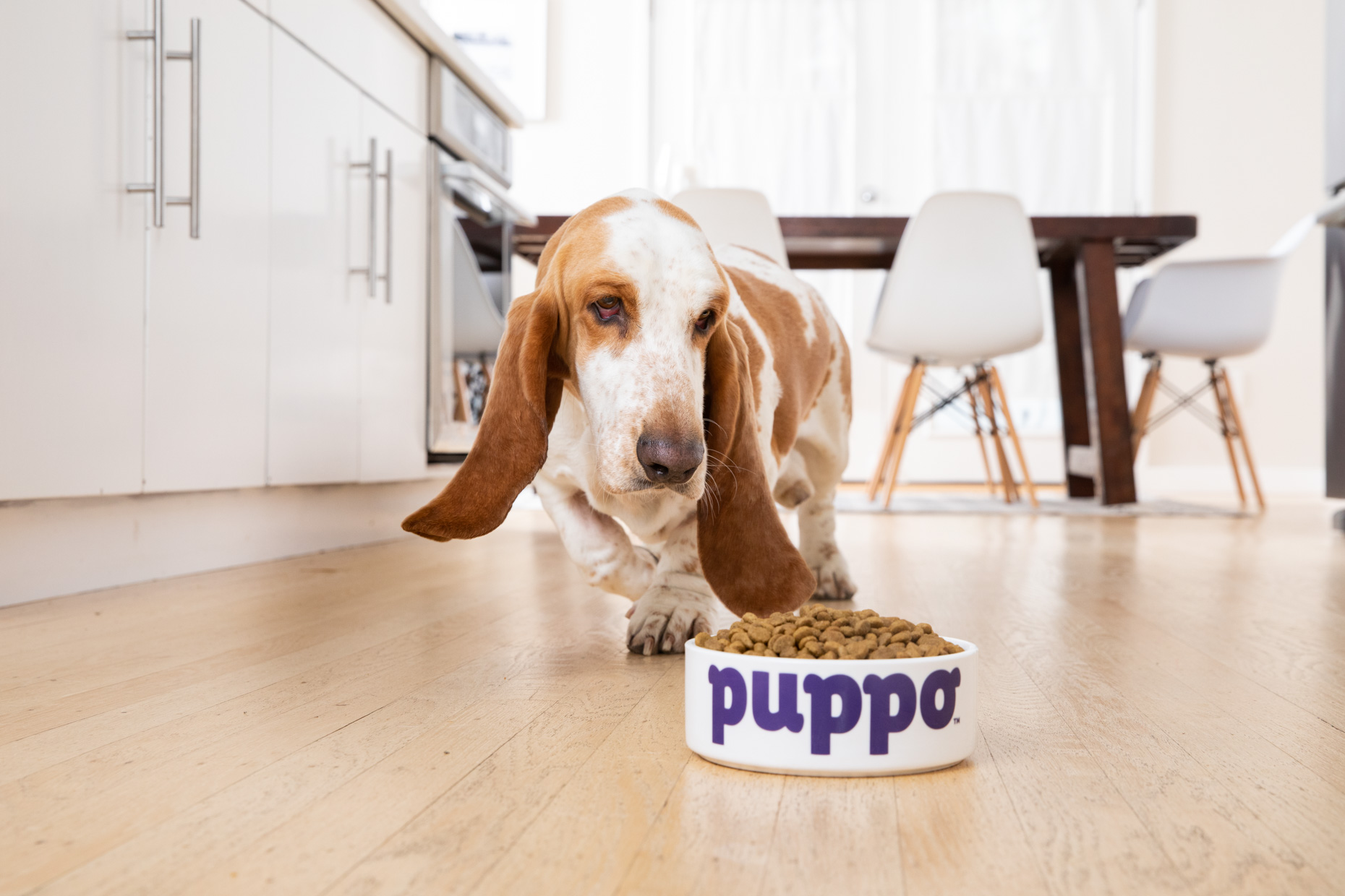 Dog  Photography | Cute Dog and Food Bowl by Mark Rogers