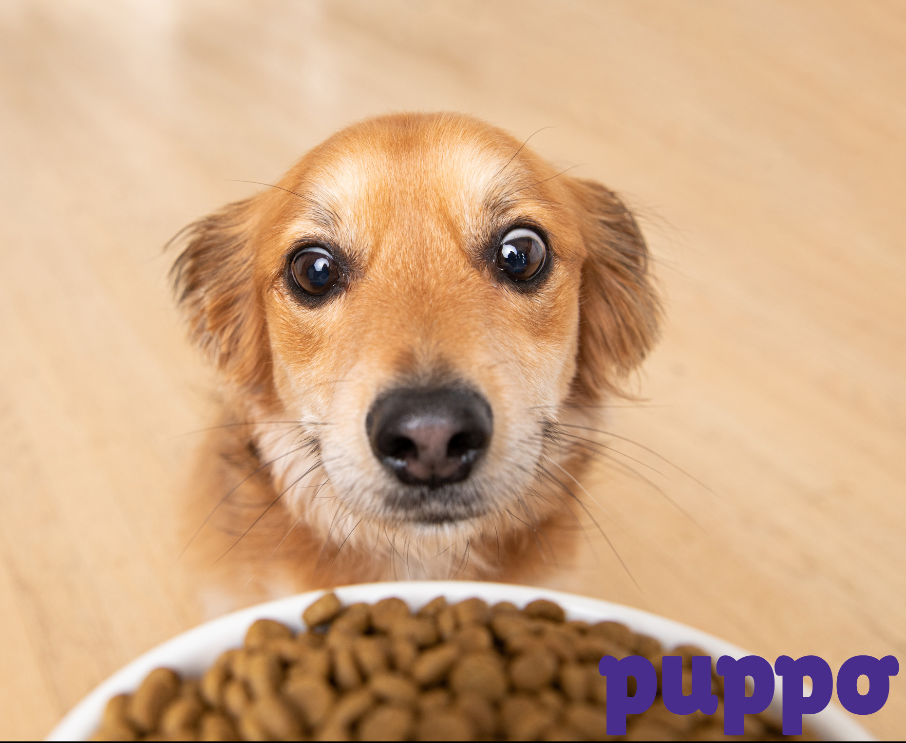 Dog  Advertising Photography | Basset Hound  and Food Bowl by Mark Rogers