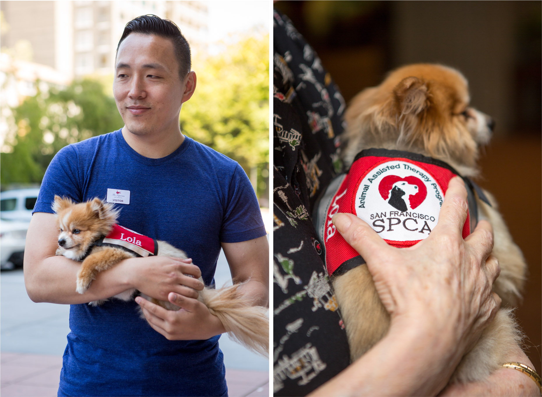 Editorial Photography | Pomeranian Therapy Dog in Vest by Mark Rogers