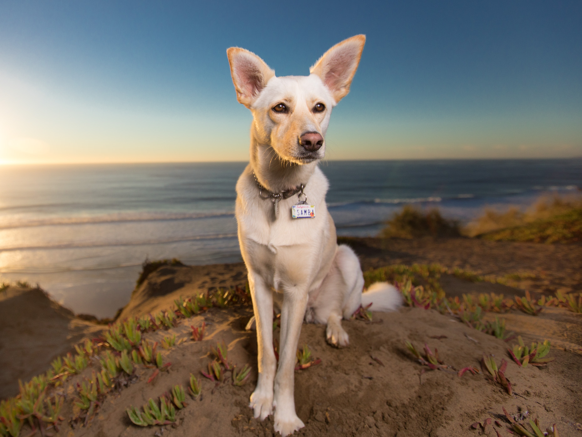 Pet Photography | White Dog and Beach Sunset by Mark Rogers