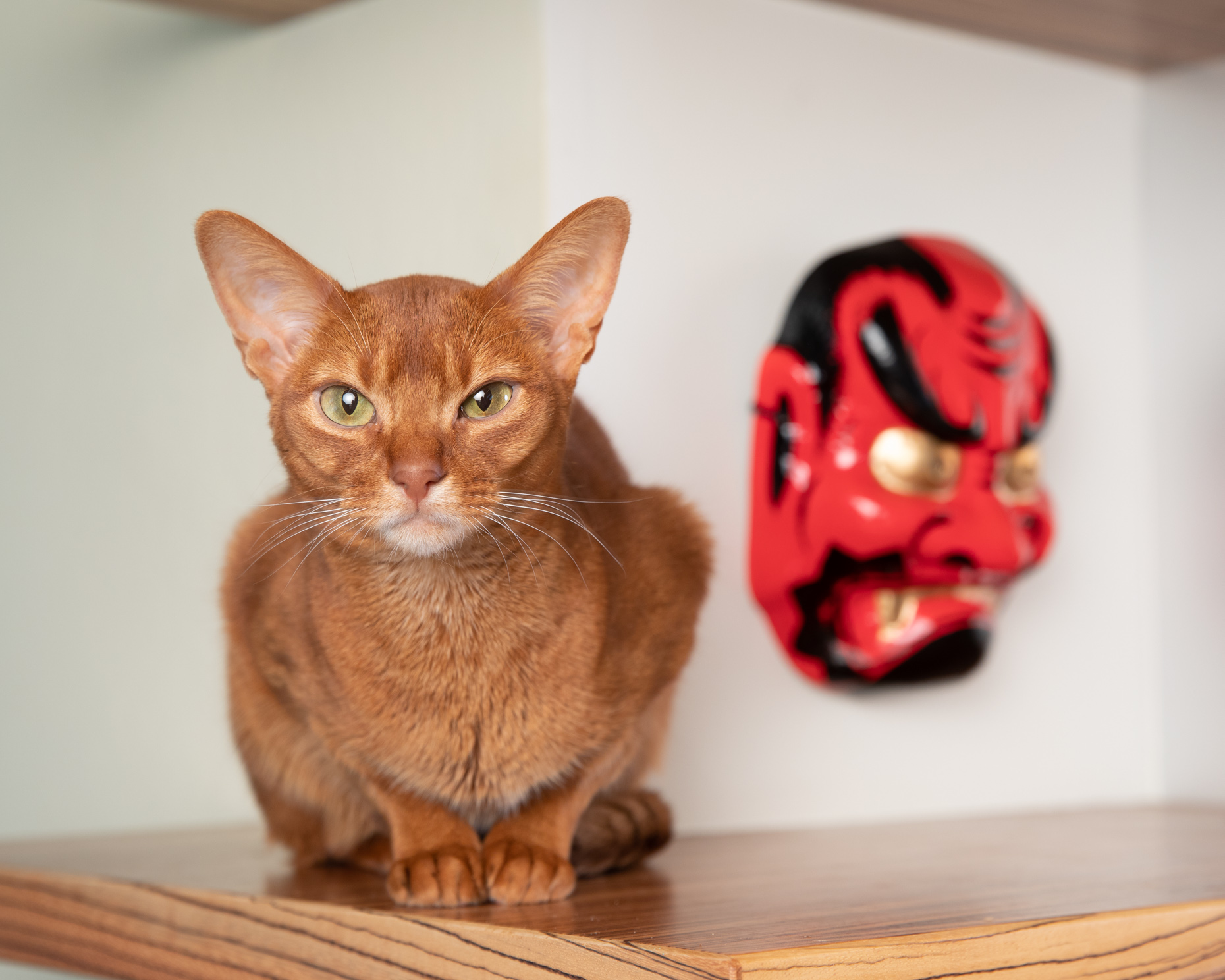 Humorous Pet Photography | Cat Next to Mask by Mark Rogers