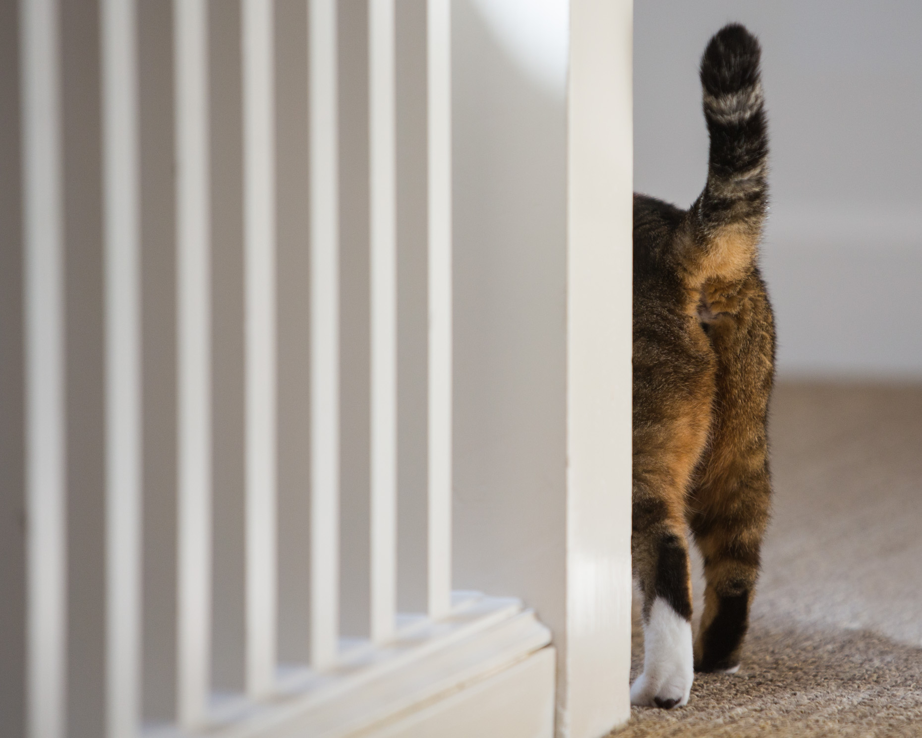 Funny Pet Photography | Cat Walking Away by Mark Rogers