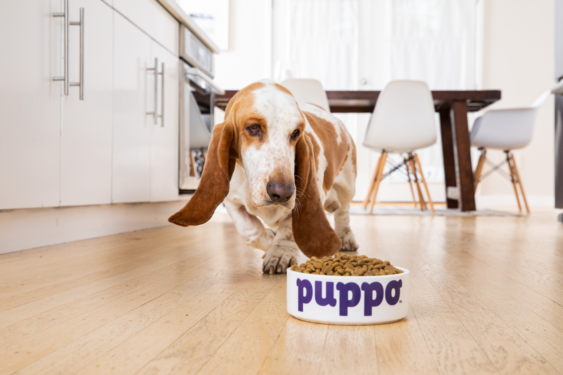 Pet Advertising Photography | Basset Hound Walking by Food by Mark Rogers