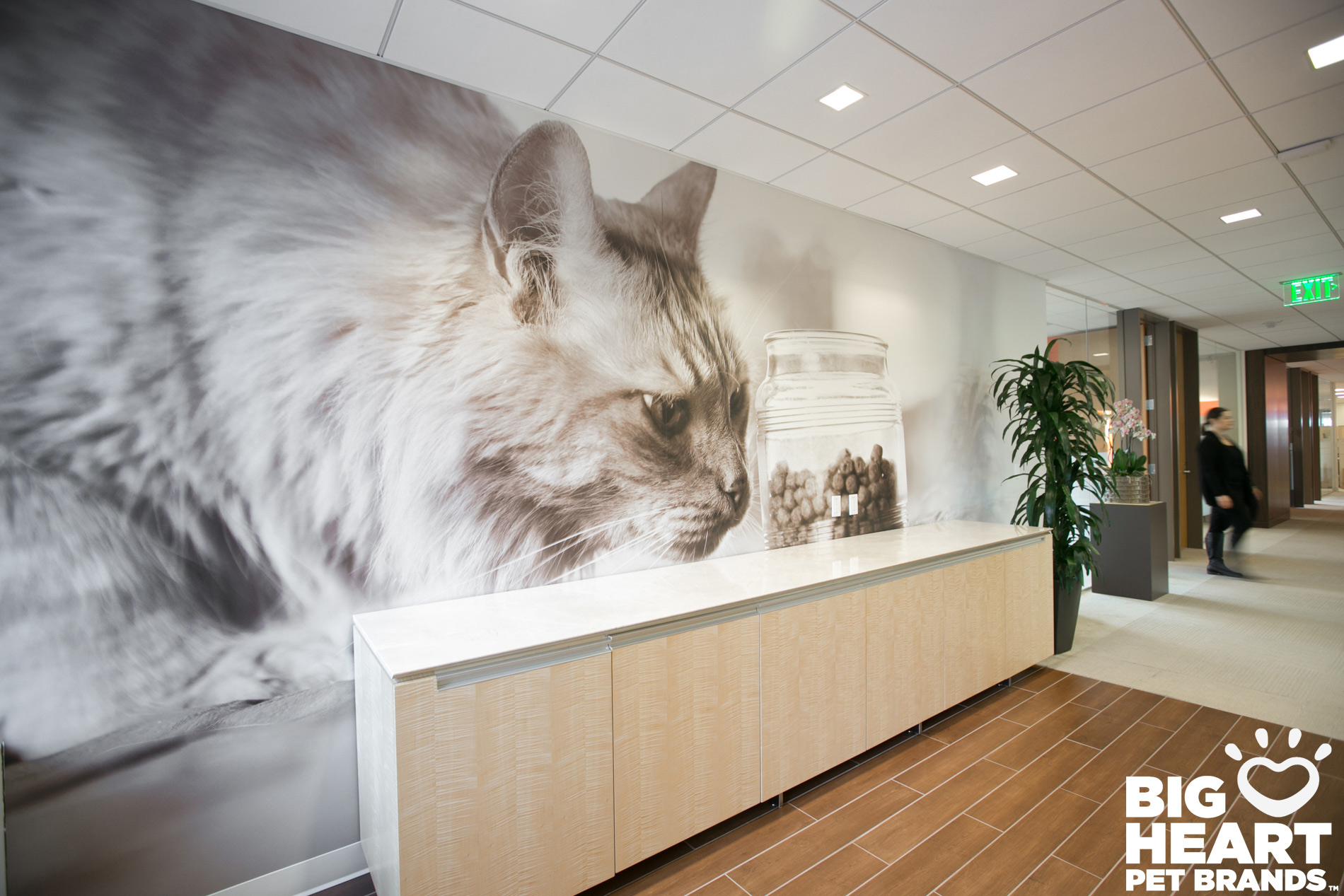 Commissioned Photography | Big Heart Cat by Mark Rogers