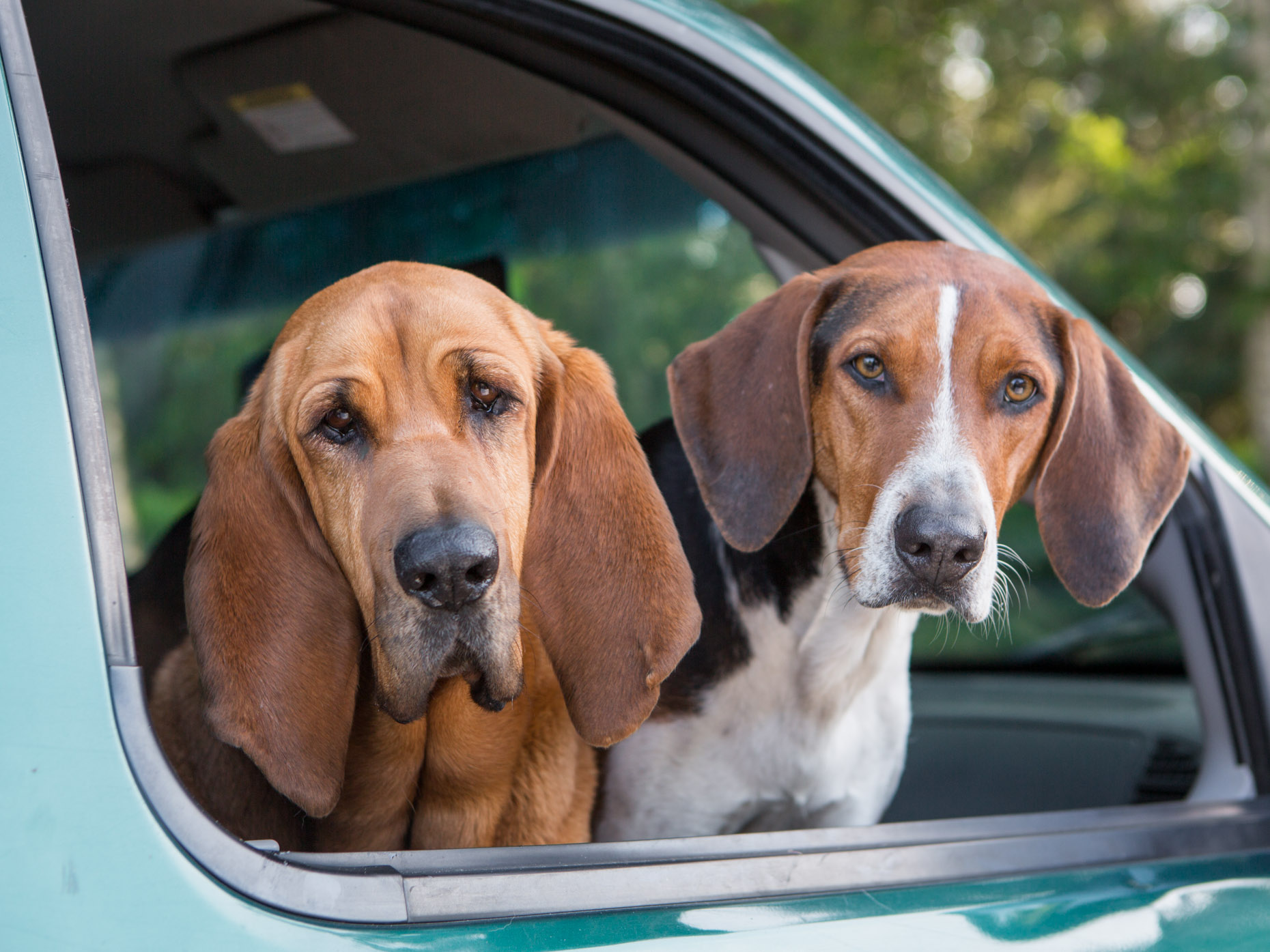 Dog Lifestyle Photography | Two Hounds in Car Window by Mark Rogers
