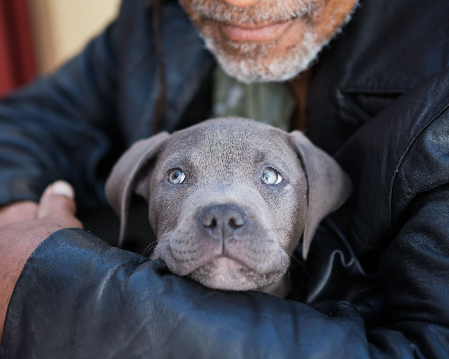 Commercial Animal Photography | Close-up of Blue Puppy by Mark Rogers