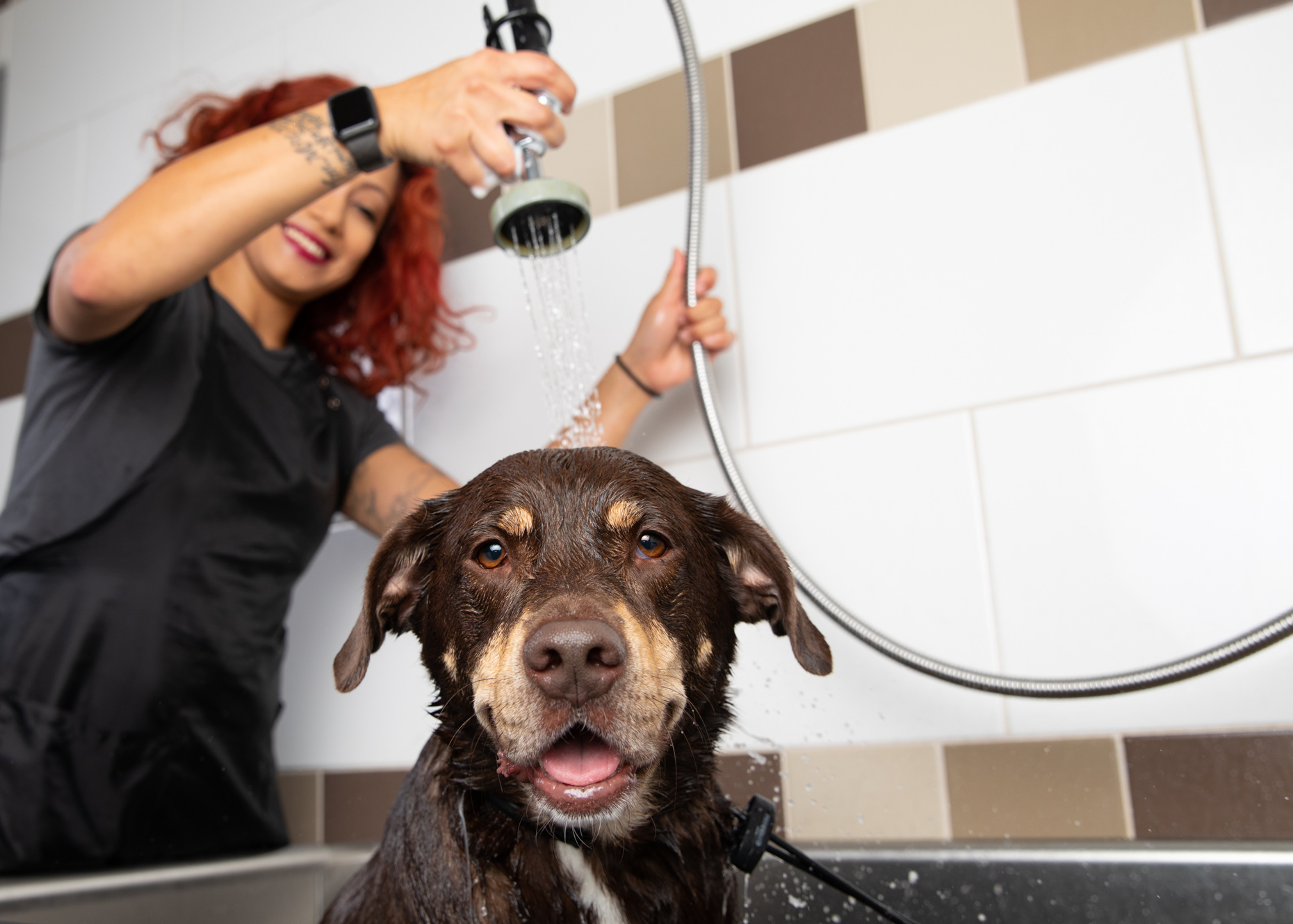 Pet Advertising Photography | Groomer Rinsing Dog by Mark Rogers
