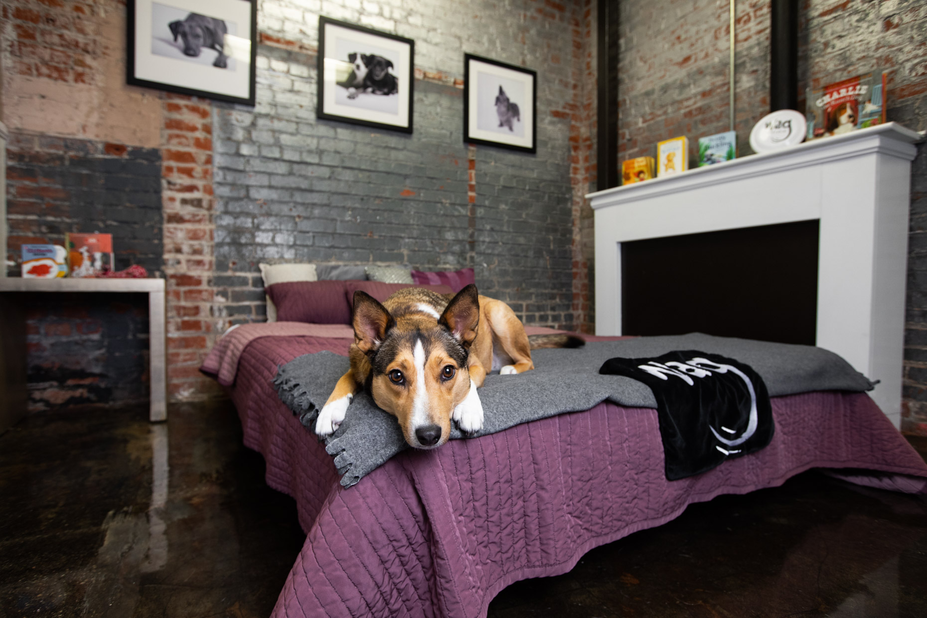 Pet Advertising Photography | Dog Lying on Bed by Mark Rogers