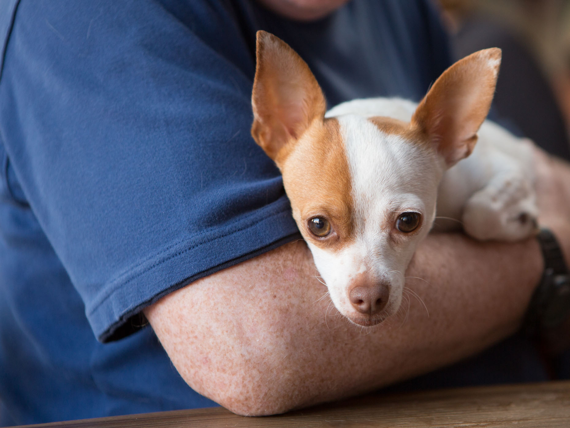 People with Pets Photography | Dog Resting on Mans Arm by Mark Rogers