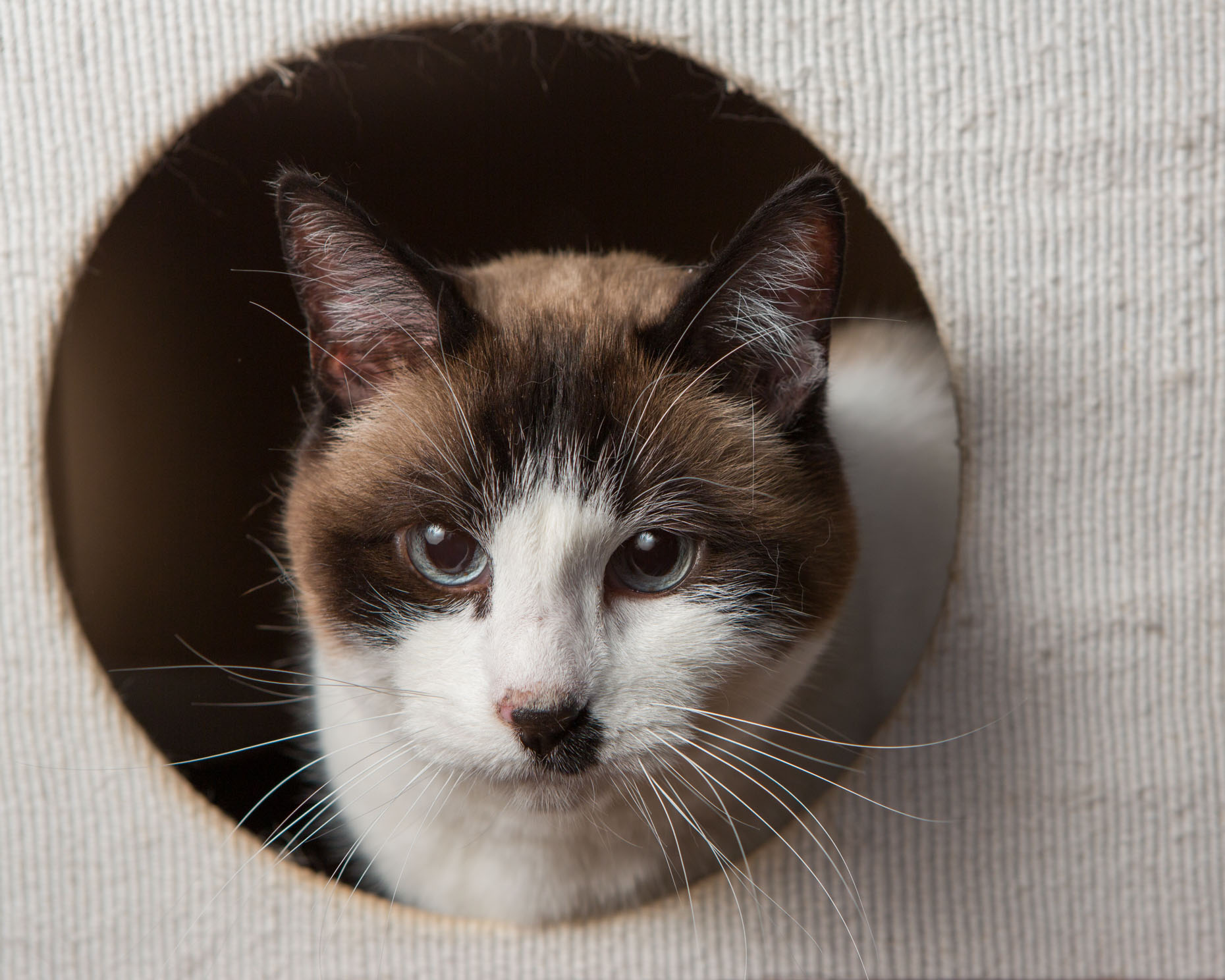 Commercial Animal Photography | Cat in Cat House by Mark Rogers