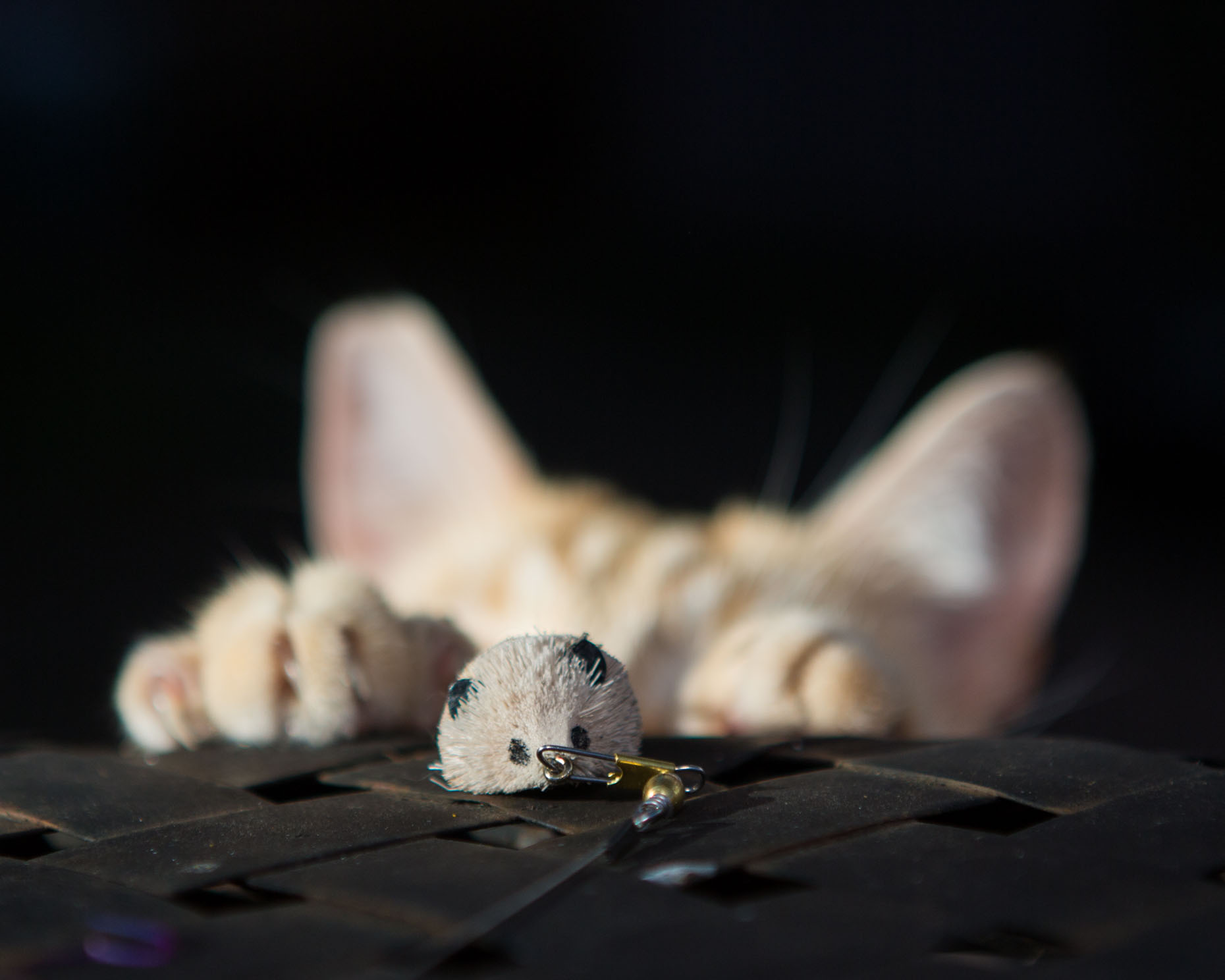 Cat Photography | Cat Stalking Toy by Mark Rogers