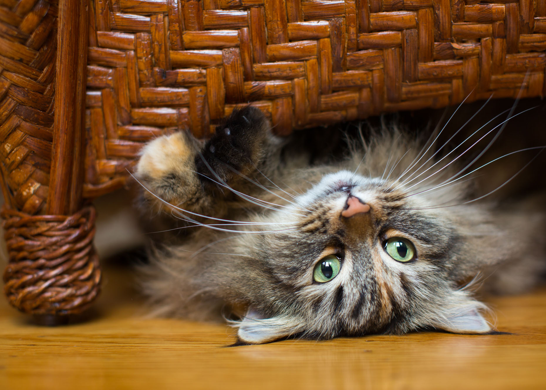 Cat and Pet Photography | Cat Under a Chair by Mark Rogers