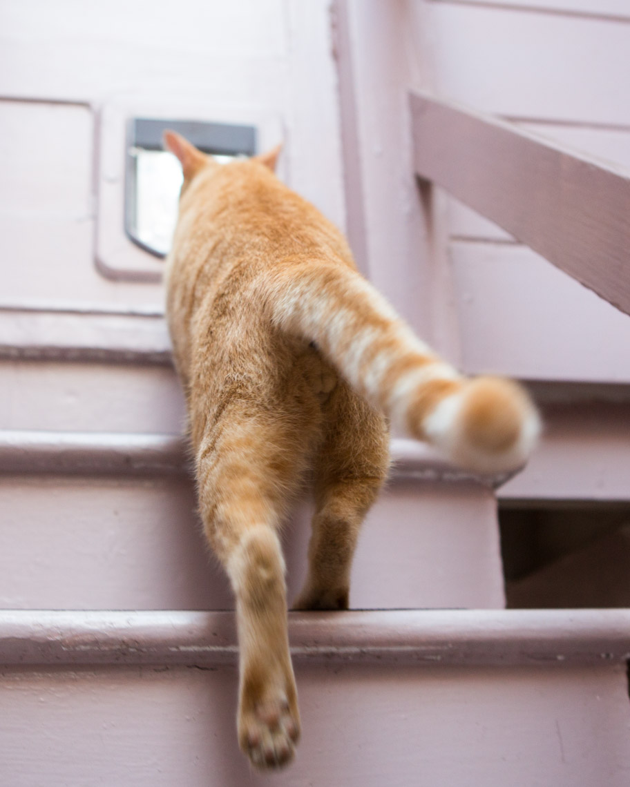 cat-walking-through-pet-door_2