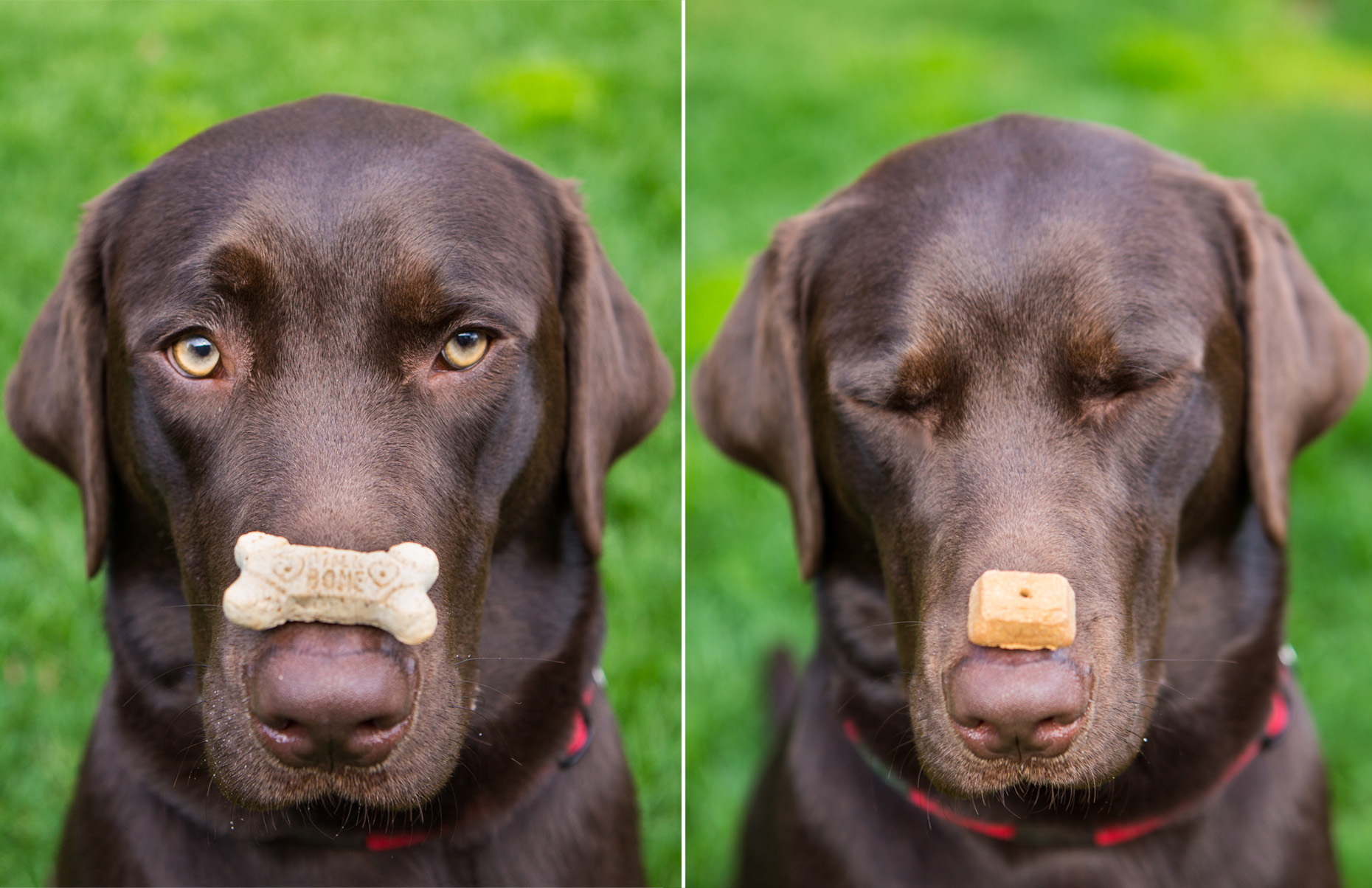 Commercial Photography | Dog with Treat by Mark Rogers
