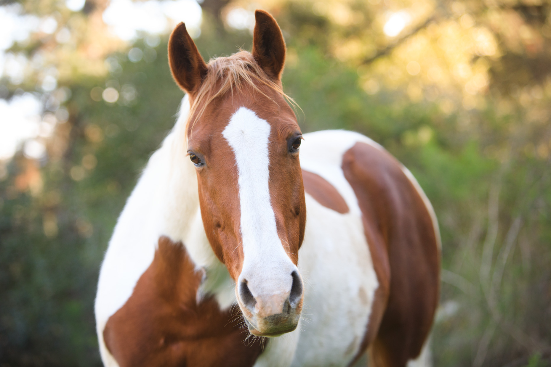 Horse Photography | Painted Mare by Mark Rogers