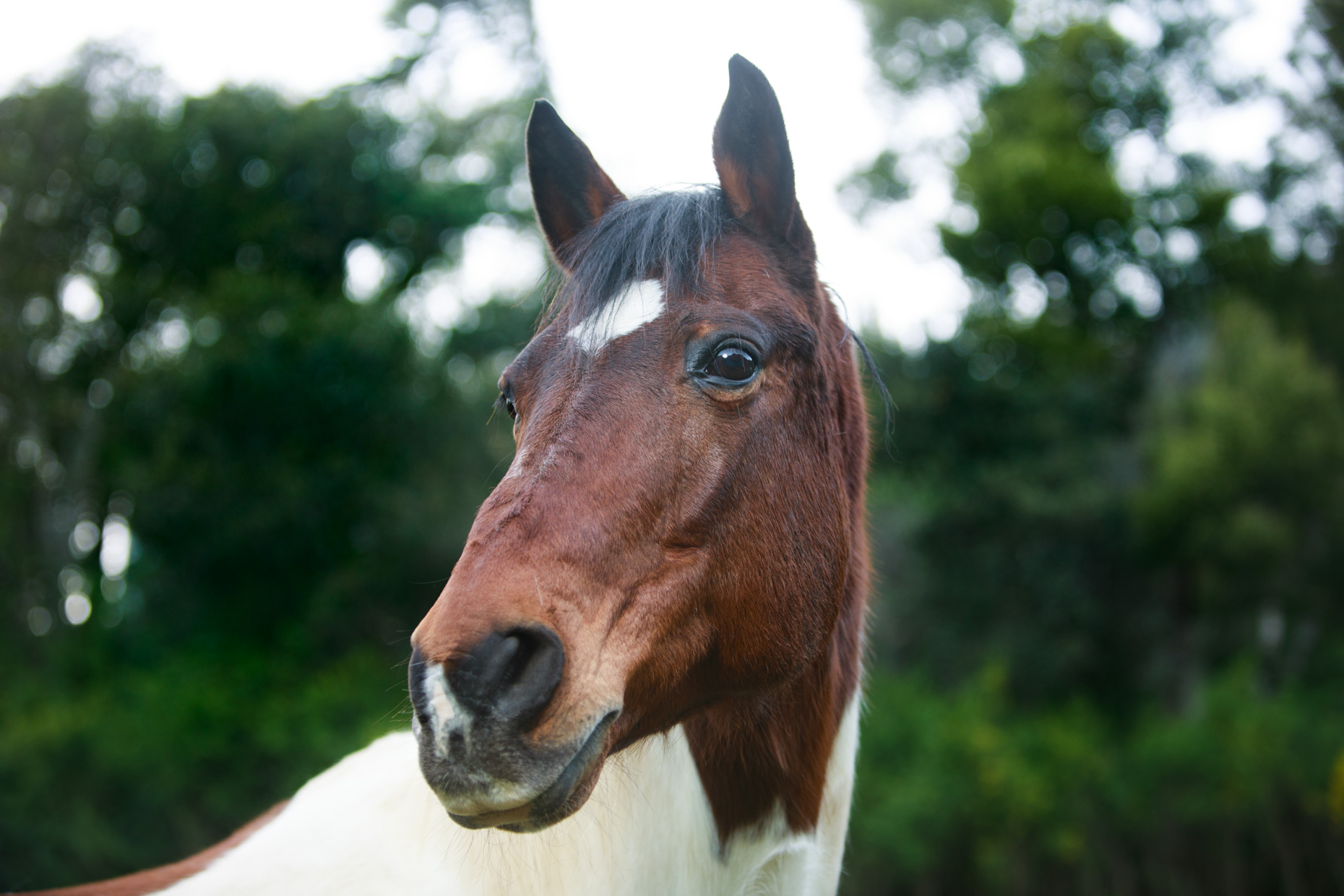 Animal Photography | Horse Portrait by Mark Rogers