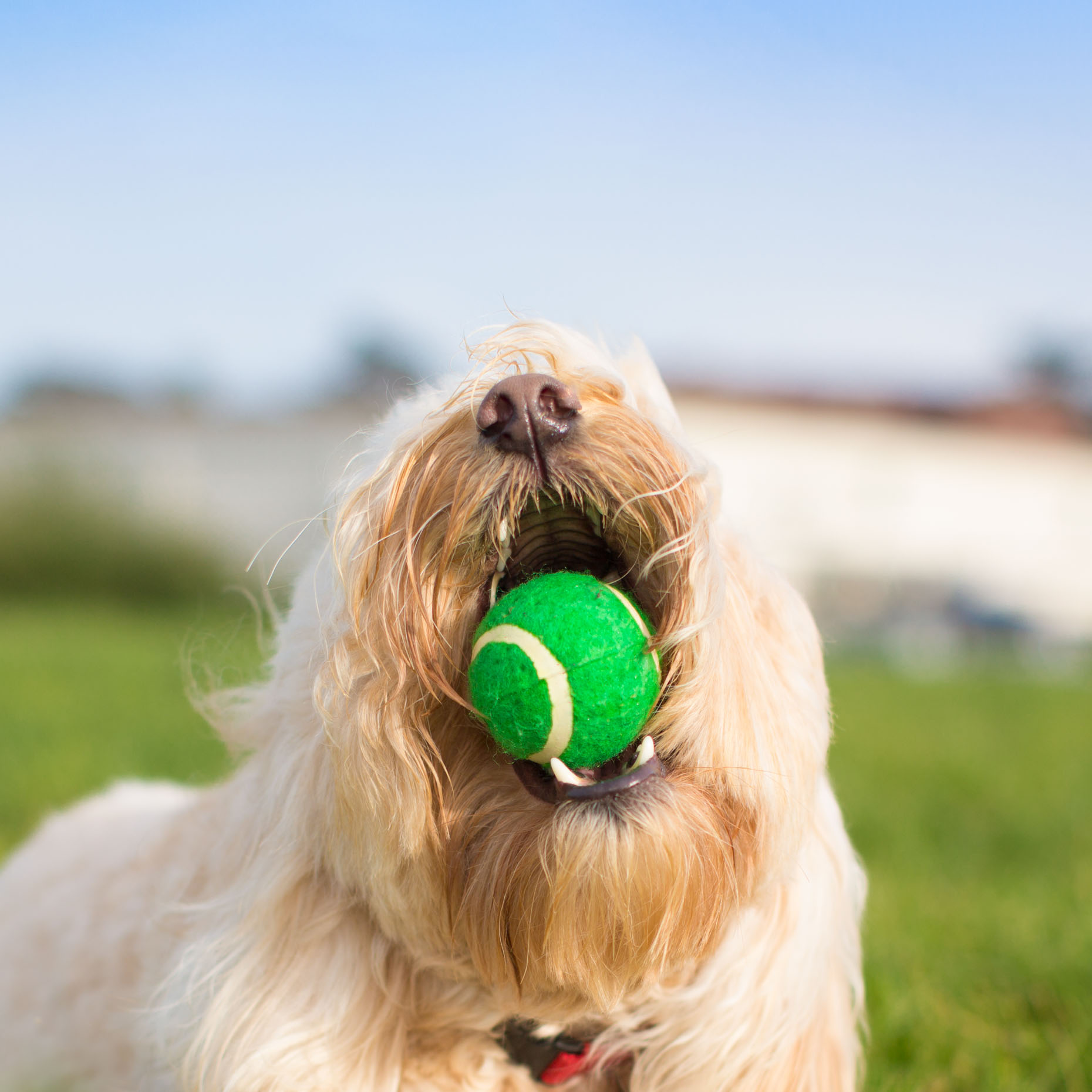 Commercial Animal Photography | Dog with Ball by Mark Rogers
