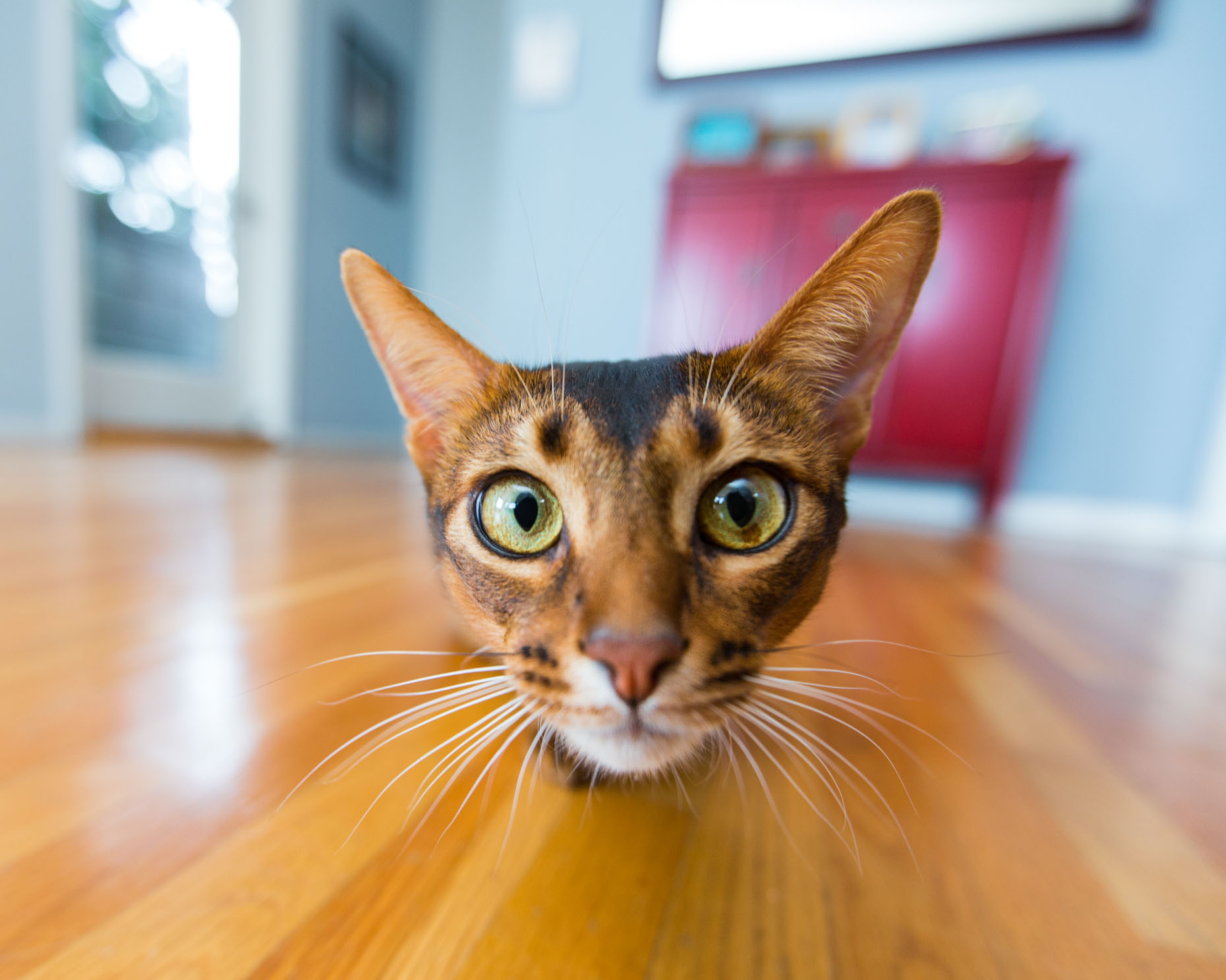 Cat and Pet Photography | Curious Cat Face by Mark Rogers