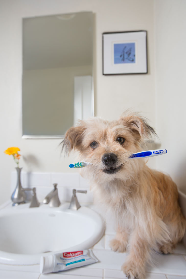 Commercial Photography | Dog Holding Toothbrush by Mark Rogers