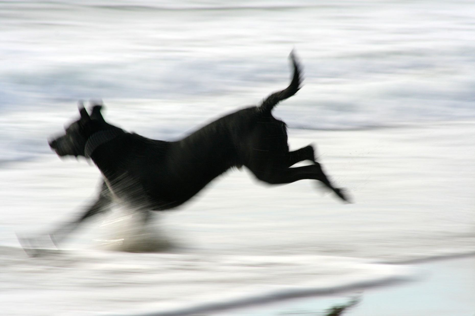 Dog Photography | Dog Running in the Ocean by Mark Rogers