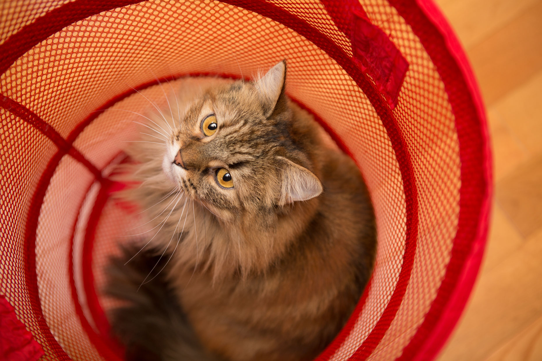 Cat and Pet Photography | Fluffy Cat In Hamper by Mark Rogers