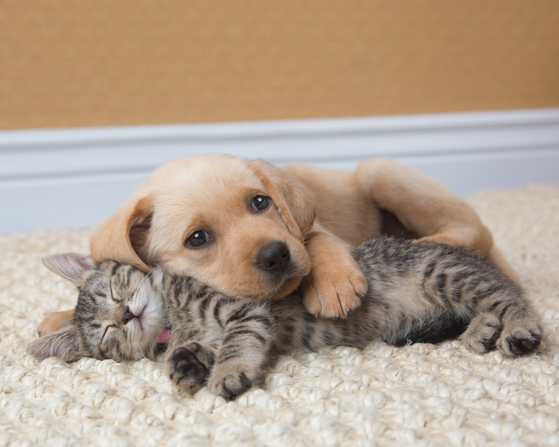 Cat and Dog Photography | Puppy with Sleeping Kitten by Mark Rogers