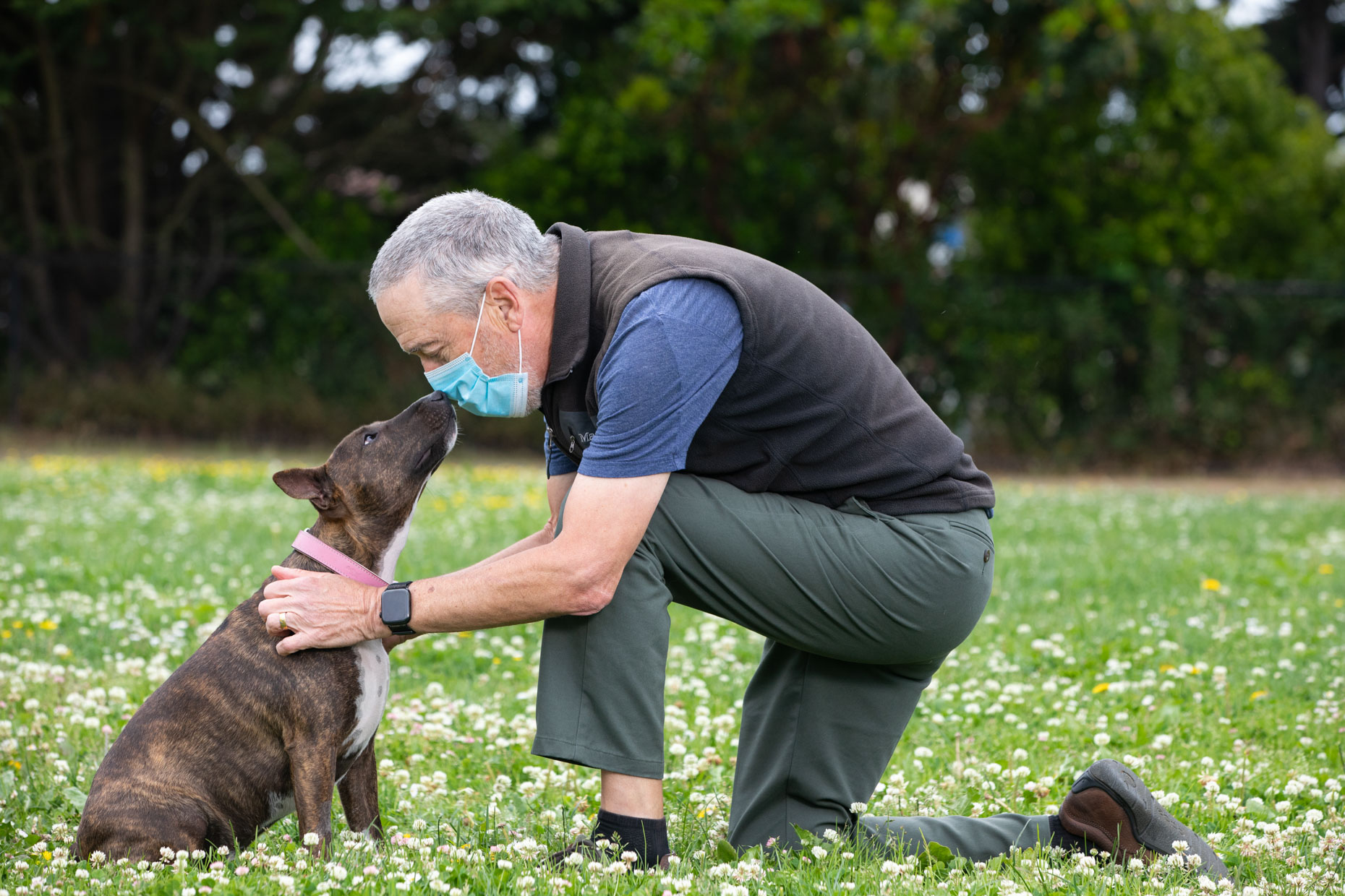 older man with gray hair and wearing surgical mask pets a small bull terrier mix dog