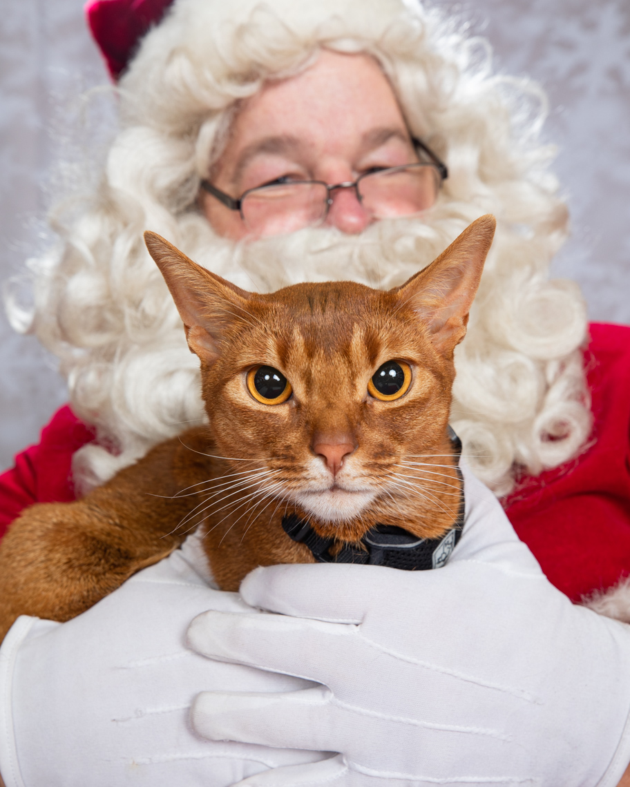 Funny Animal Photography | Santa Holding Grumpy Cat by Mark Rogers