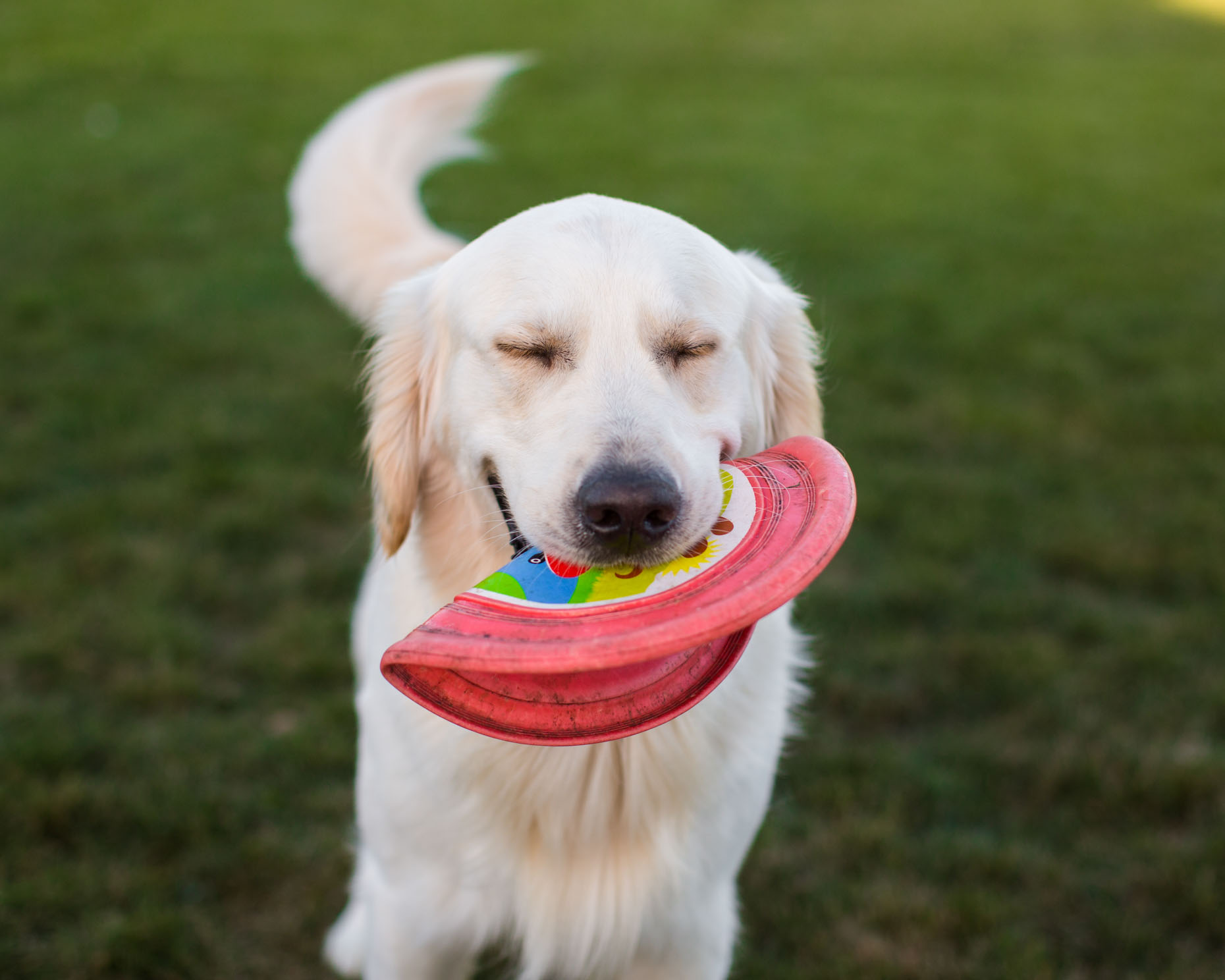 Dog and Pet Photography | Happy Dog with Frisbee by Mark Rogers