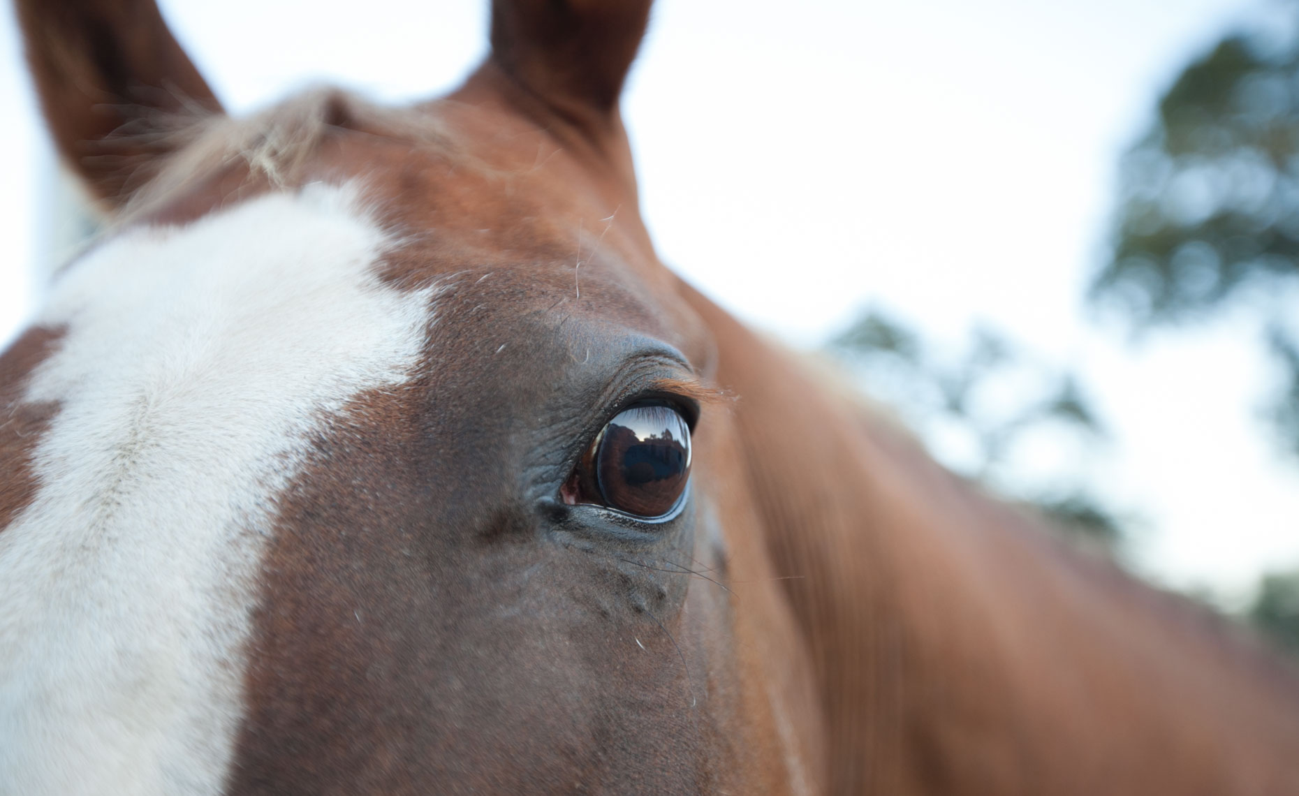Animal Photography | Horse Close-up by Mark Rogers