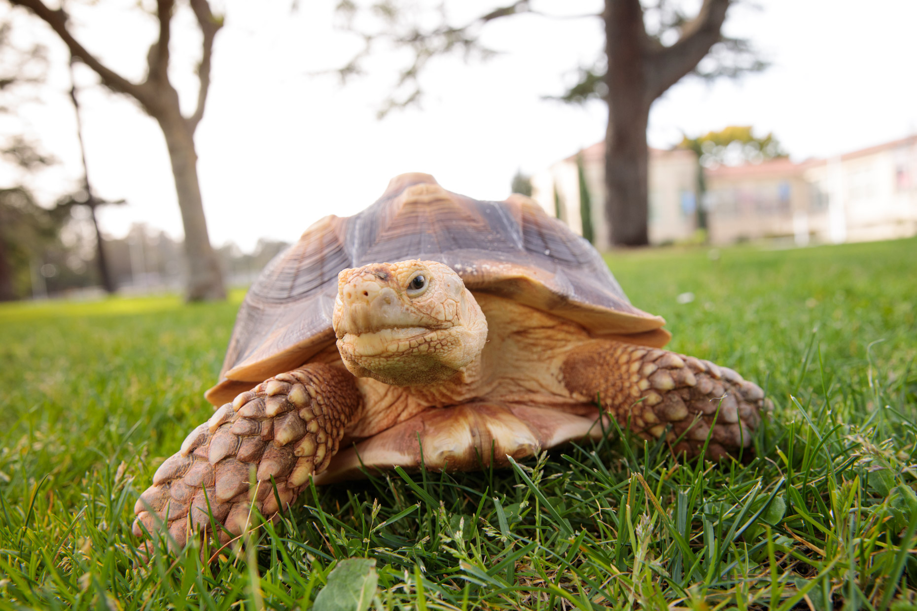 Animal Photography | Tortoise Walking by Mark Rogers