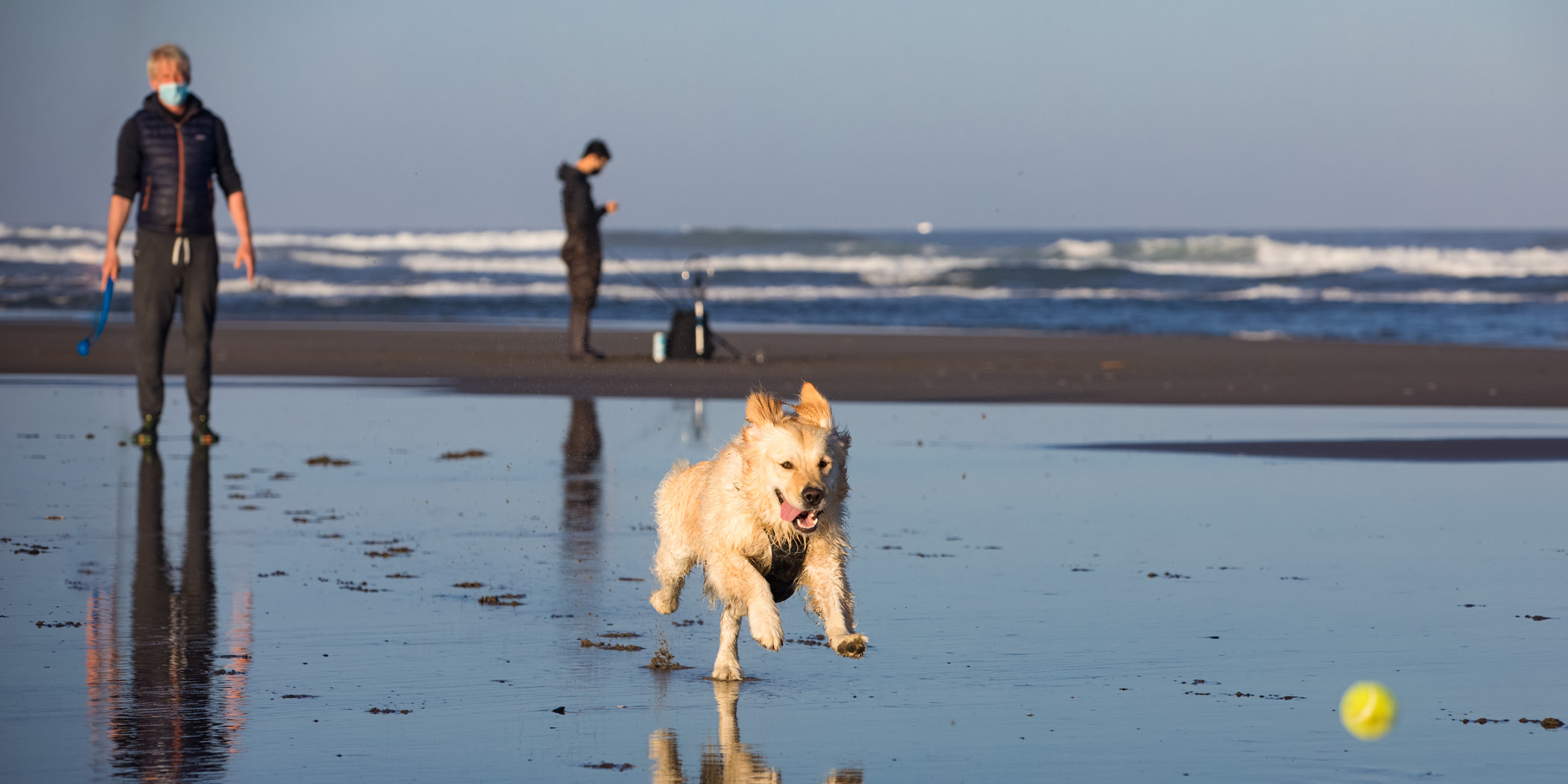 man in face mask throwing tennis ball for his dog on a beach