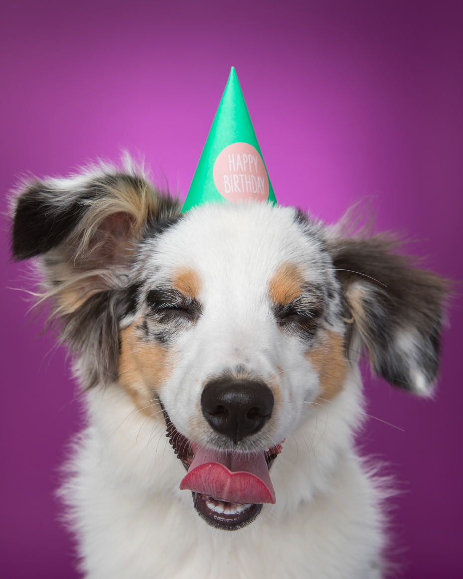 Advertising Photography | Laughing Puppy in Party Hat by Mark Rogers