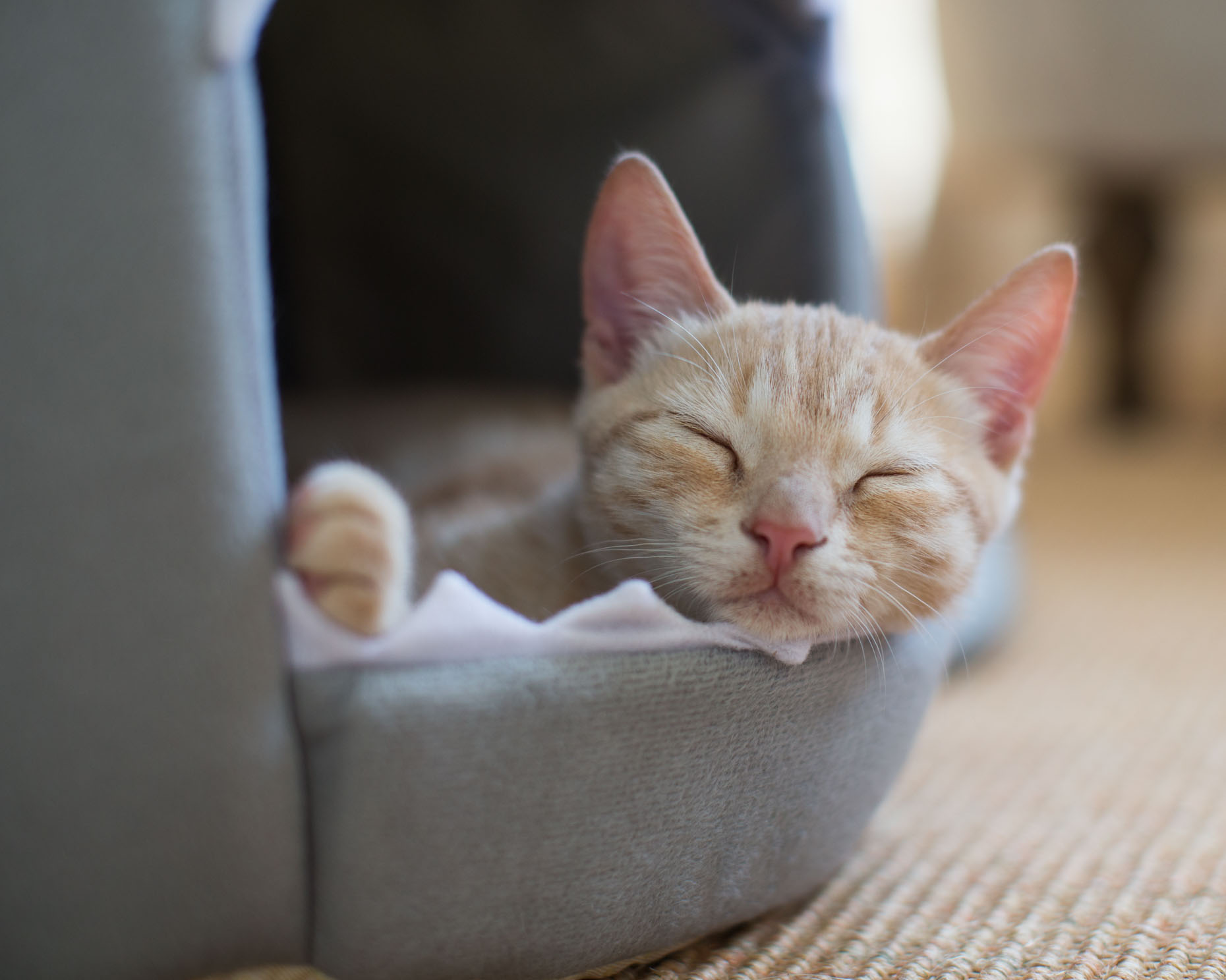 Cat Photography | Kitten Sleeping by Mark Rogers