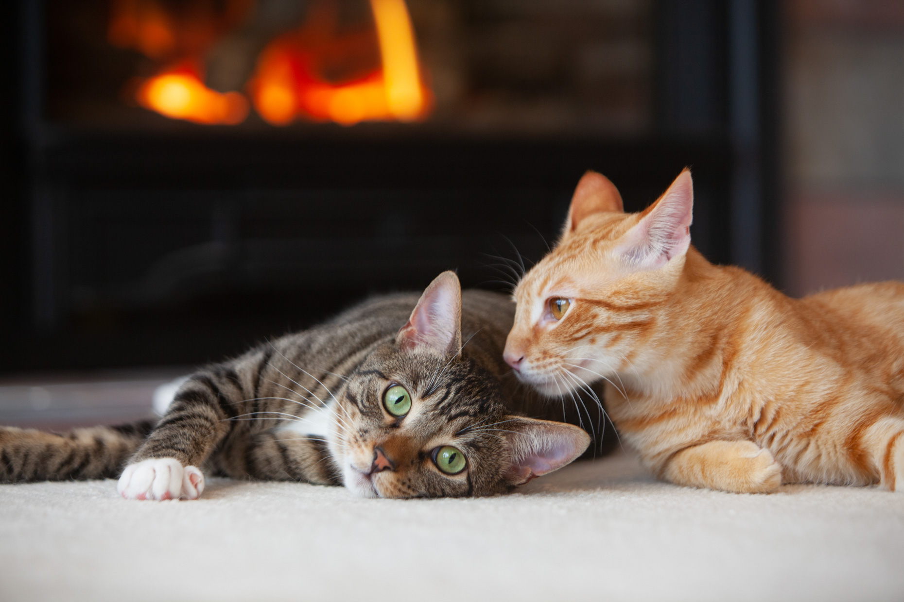 Pet Lifestyle Photography | Two Kittens on Floor by Mark Rogers