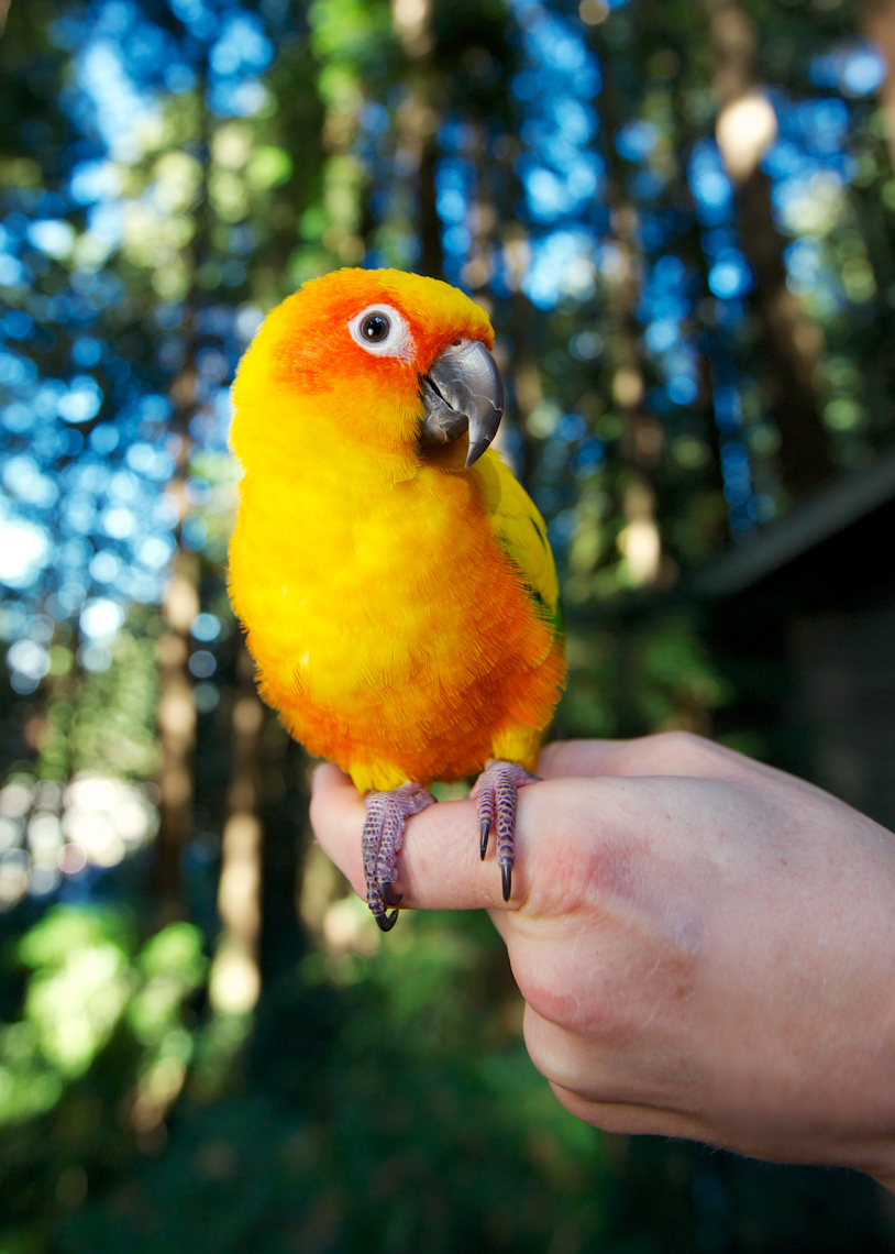 Bird and Animal Photography | Bird on Hand by Mark Rogers