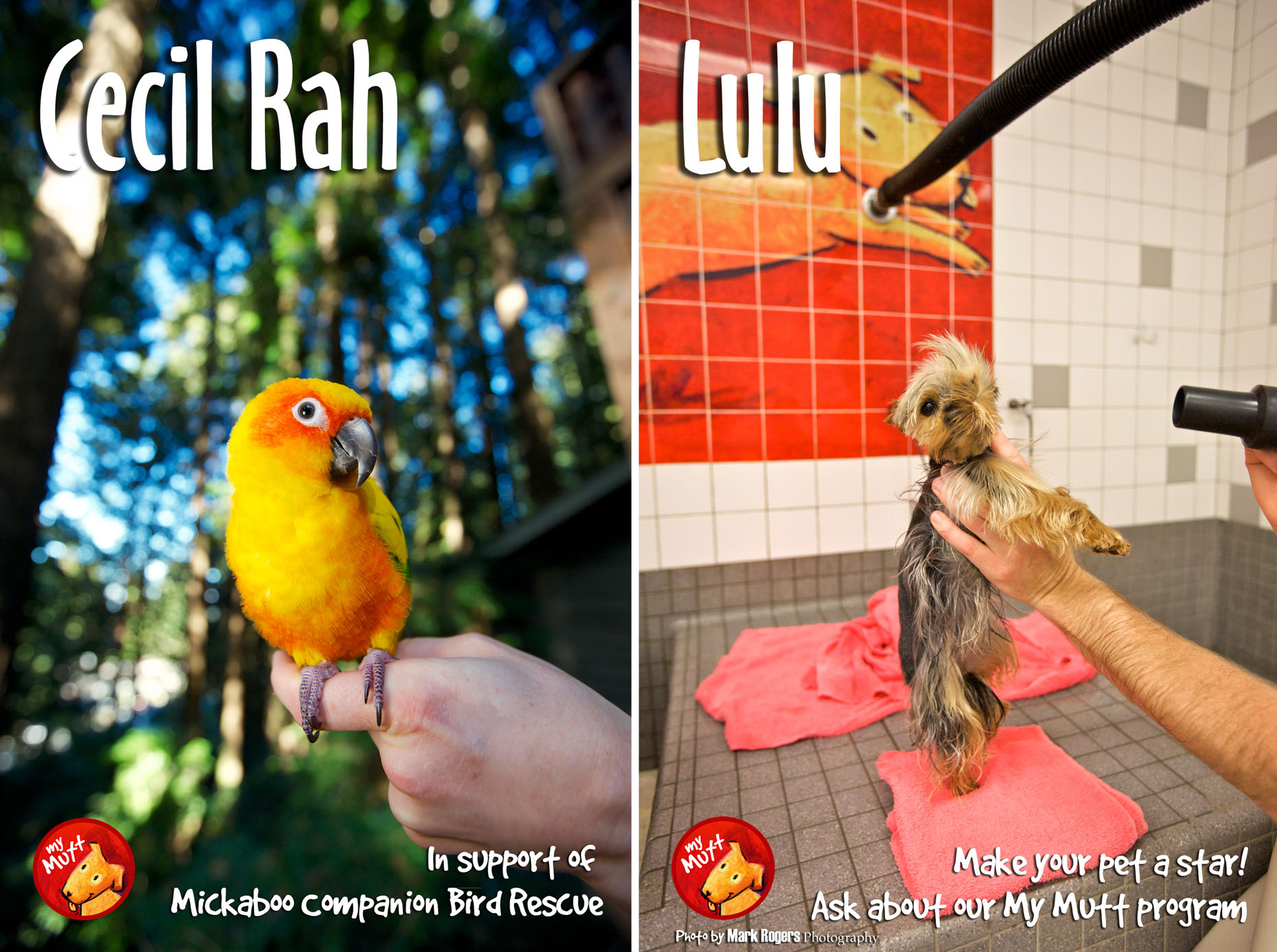 Animal Rescue Poster | Sun Conure Bird and Terrier by Mark Rogers