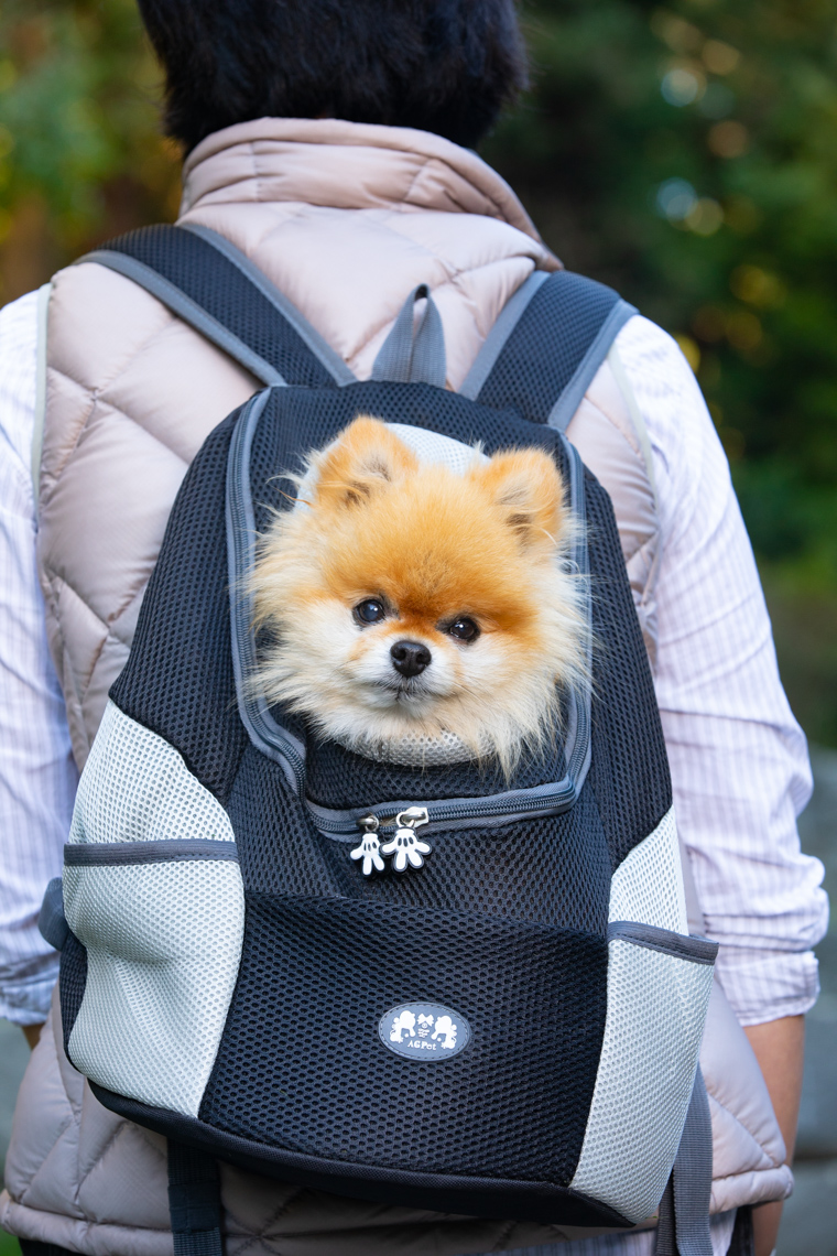 Dog Lifestyle Photography | Pomeranian in Backpack by Mark Rogers