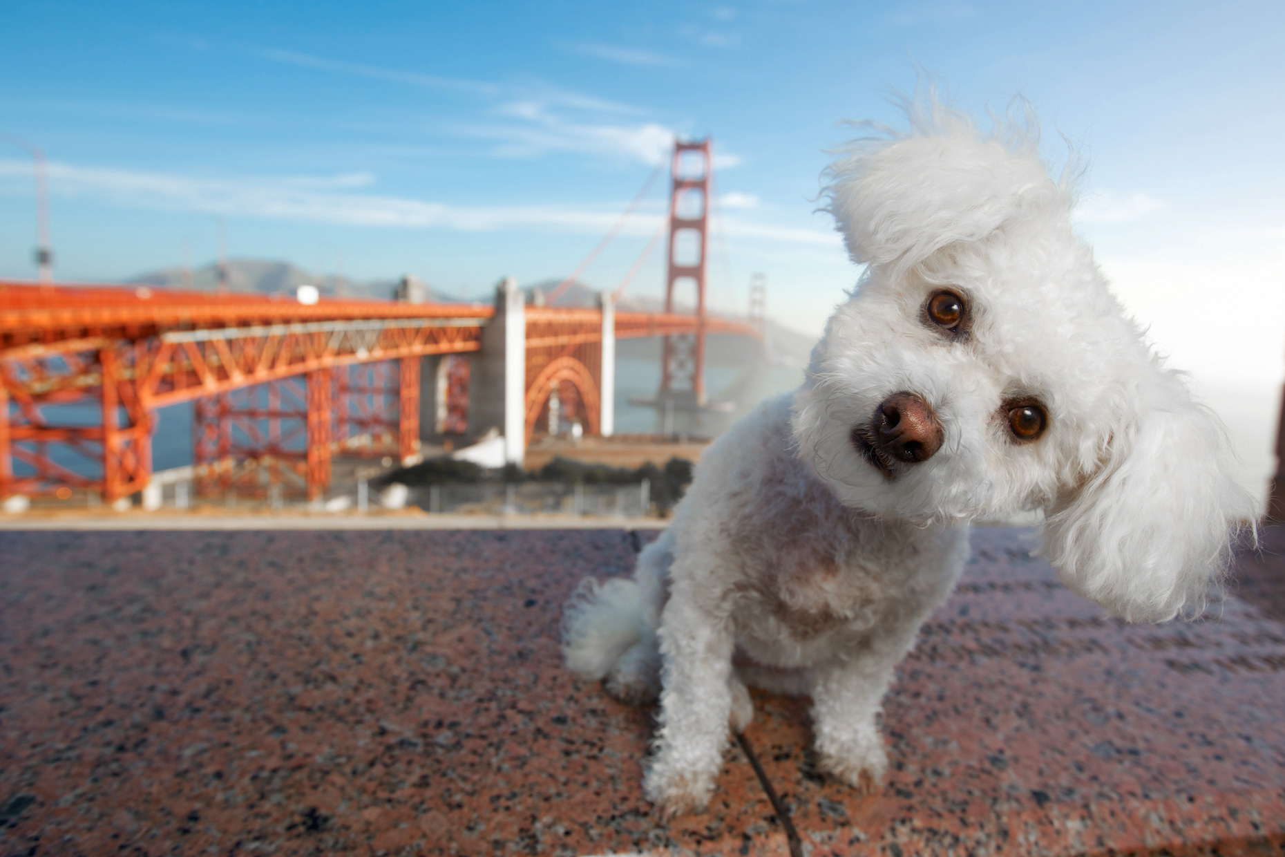 Dog Photography  |  Dog and Golden Gate by Mark Rogers
