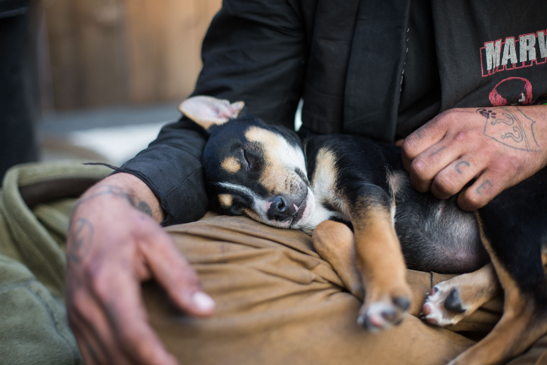Commercial Animal Photography | Puppy Asleep on Lap by Mark Rogers