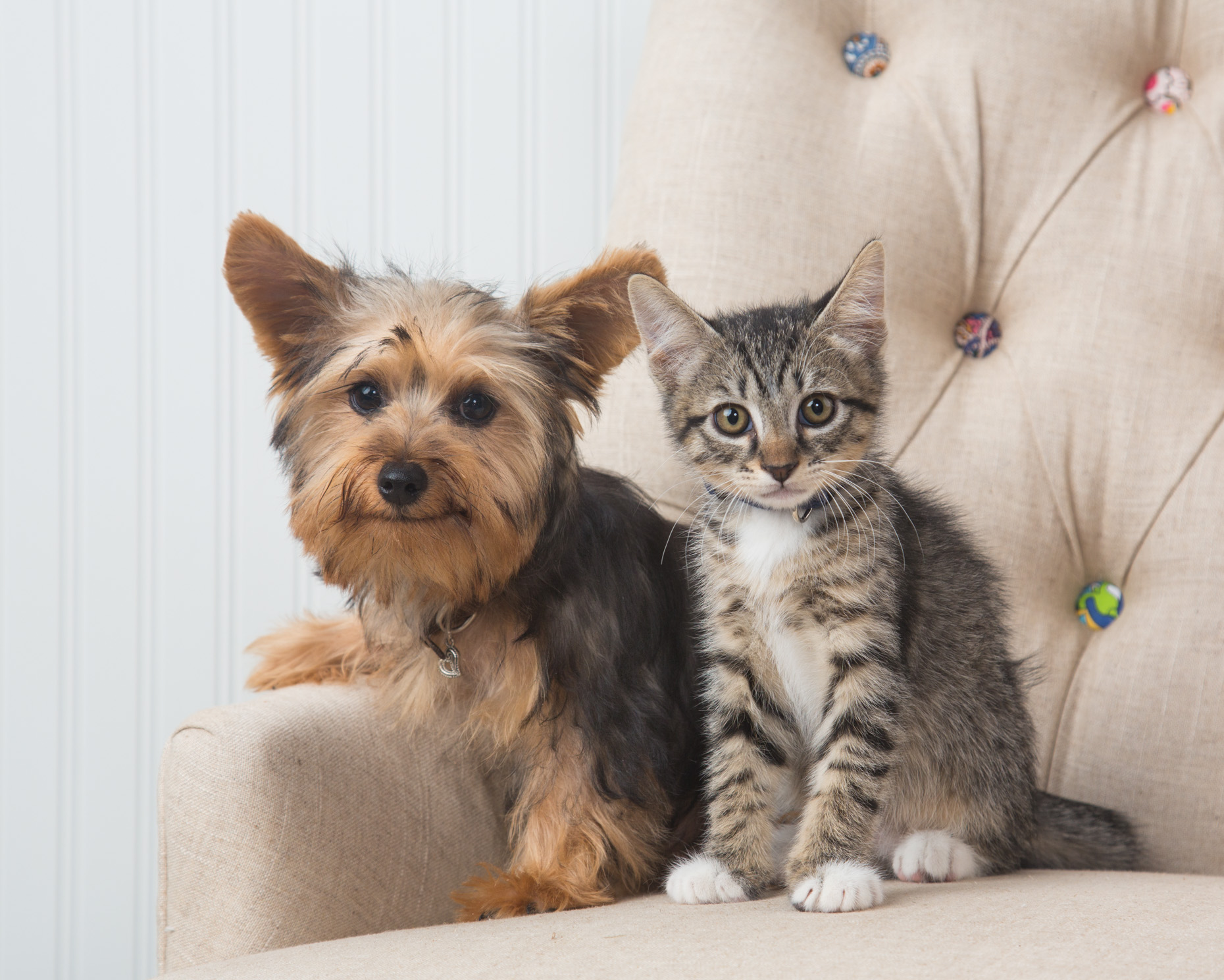 Cat and Dog Photography | Puppy and Kitten in Chair by Mark Rogers
