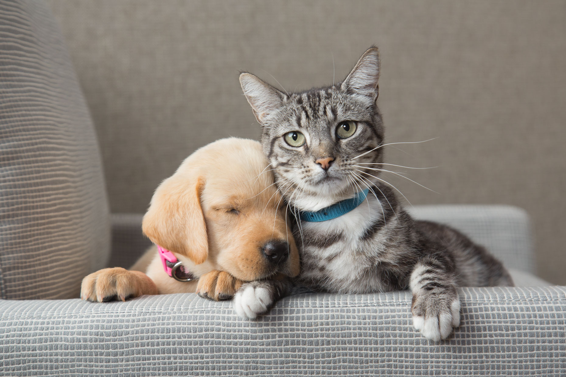 Dog and Cat Photography | Sleeping Puppy with  Cat by Mark Rogers